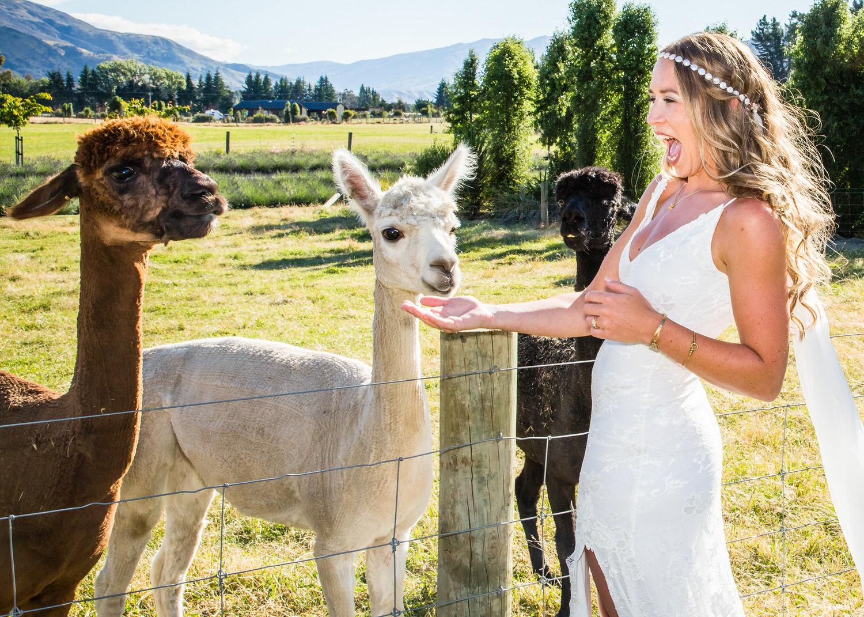 Hannah and Jordan's Lavender Farm Wedding