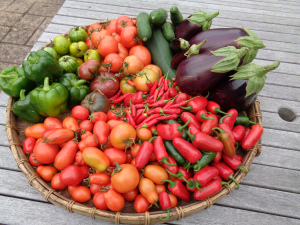 My crop