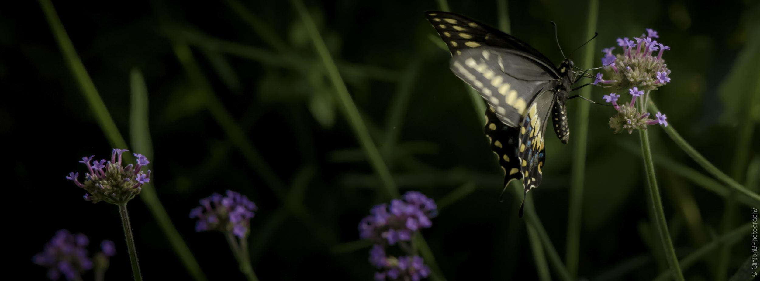 BrooklynButterfly