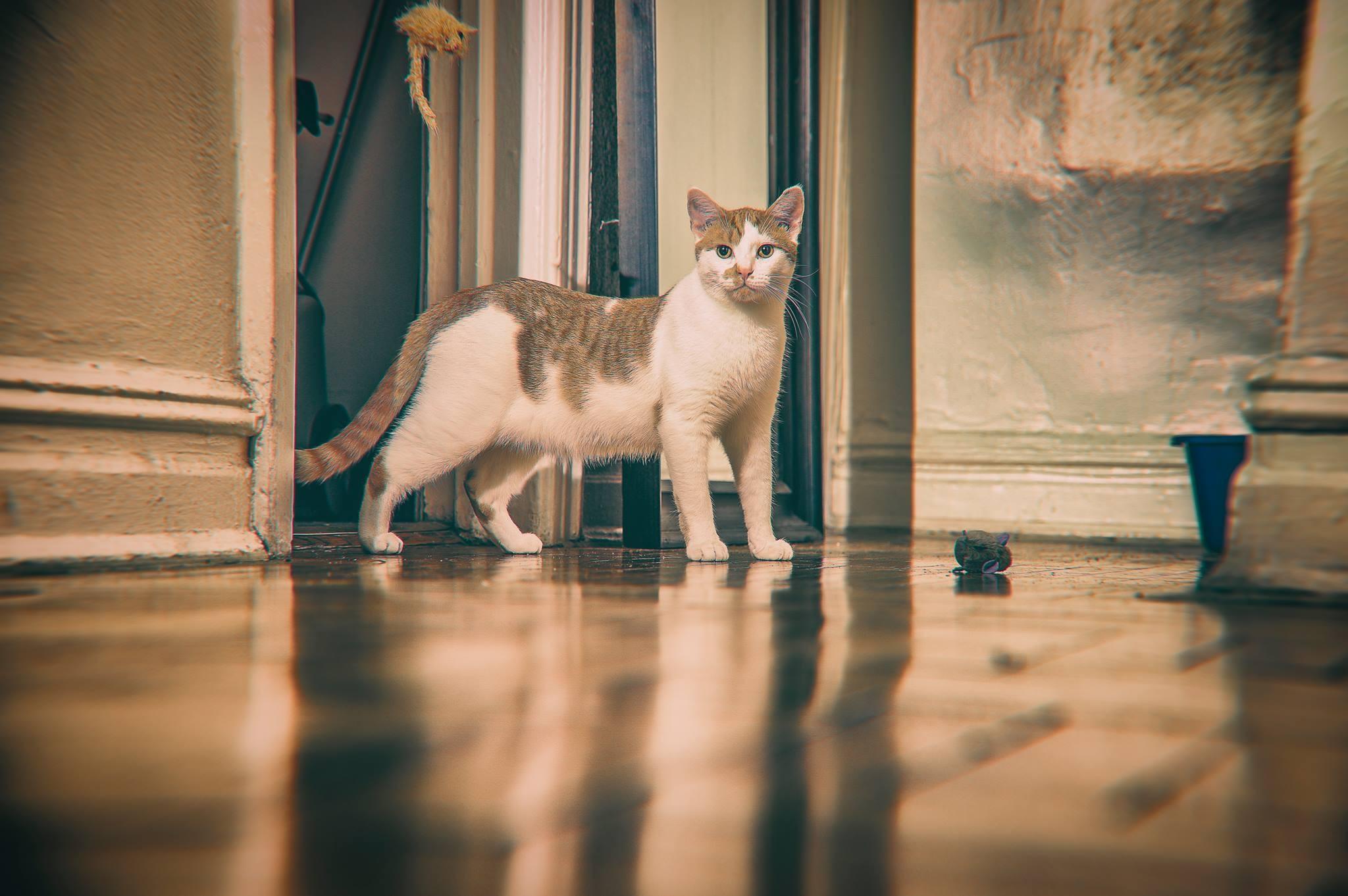 2013-12-05 13.56.18BuddyLostandfoundphotoprojectKinsey.jpg