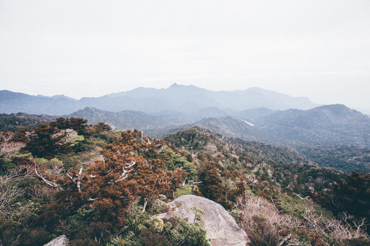 Yakushima, We Love You