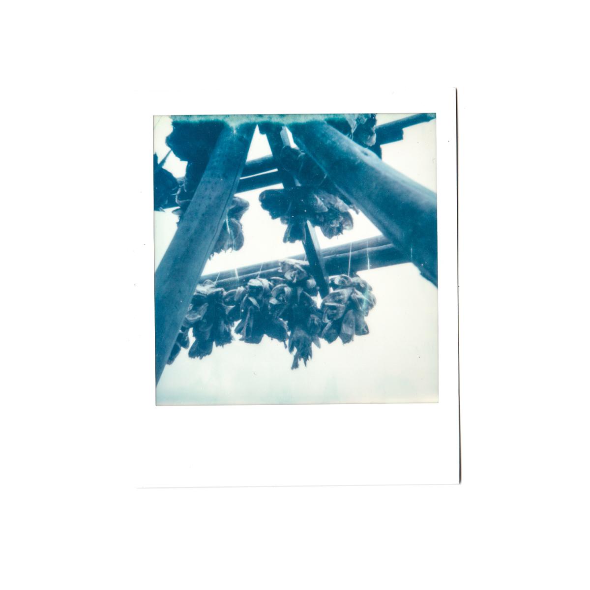 Magnolia_mountain_solvor_MT34-9.jpg