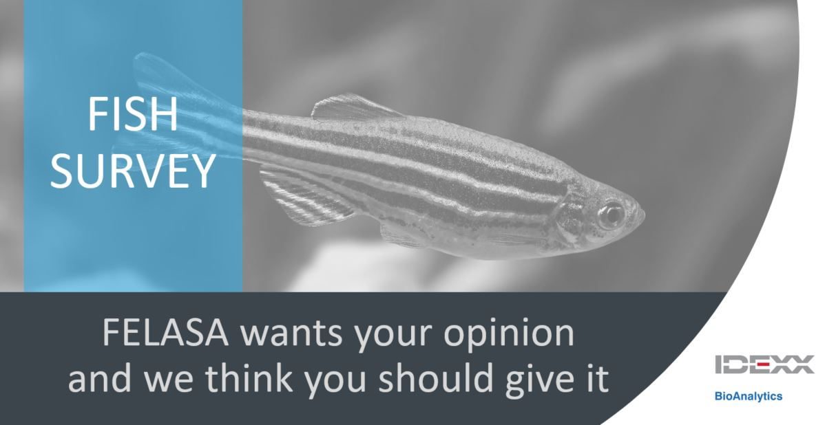 zebrafish survey.JPG
