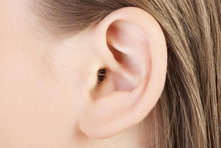 Ear Anatomy Facts