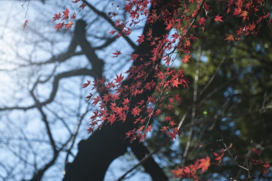 Remaining fall leave in Ueno Park, Tokyo.