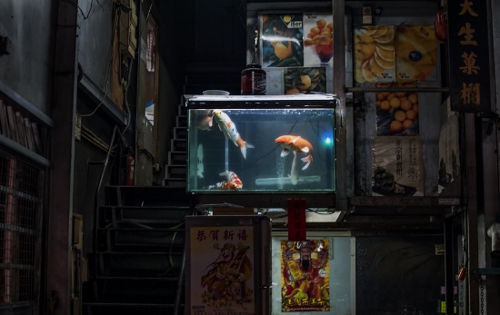 Fish tank in a fruit shop in Yau Ma Tei.