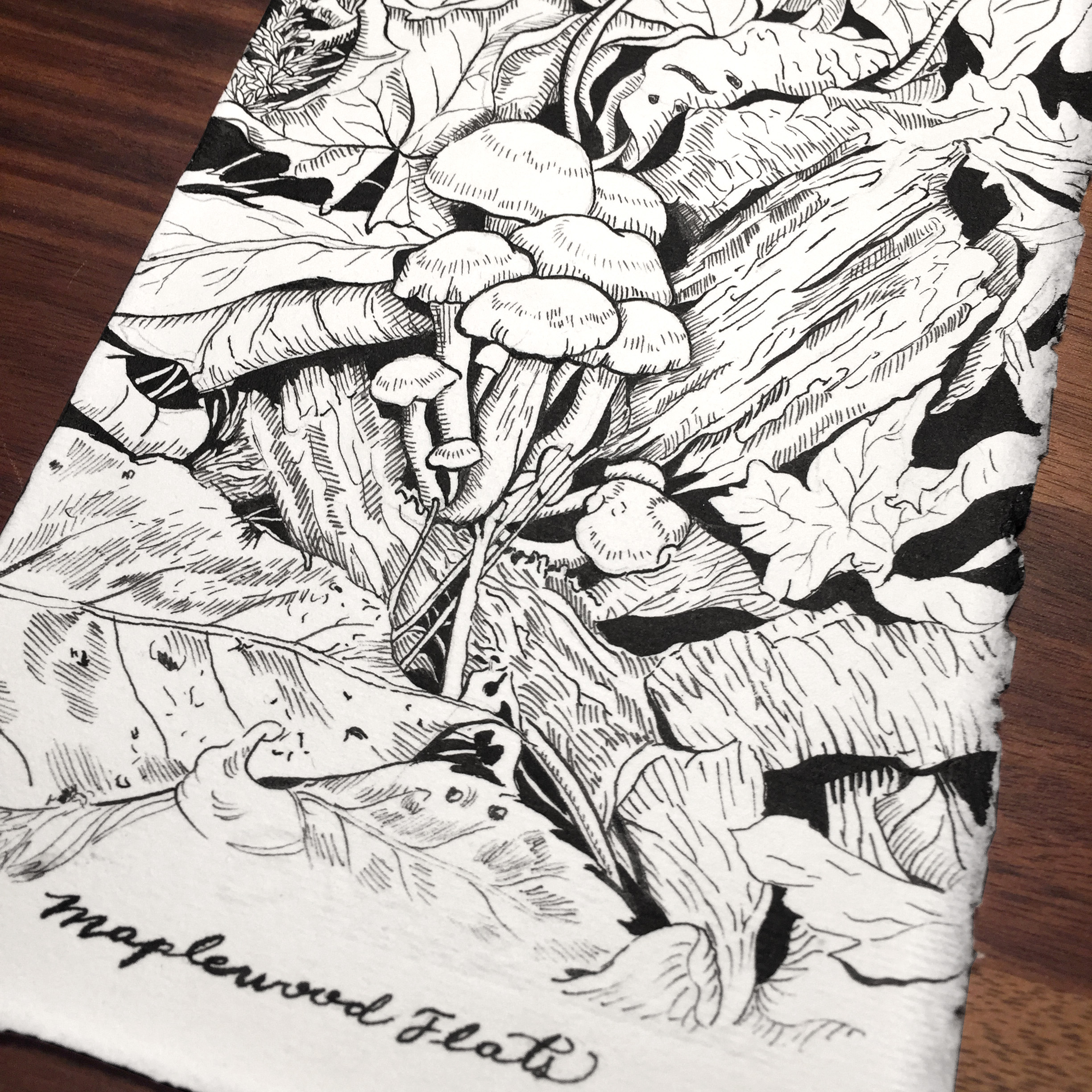 Learn to draw and paint with Ink, using the hatching and cross-hatching technique.