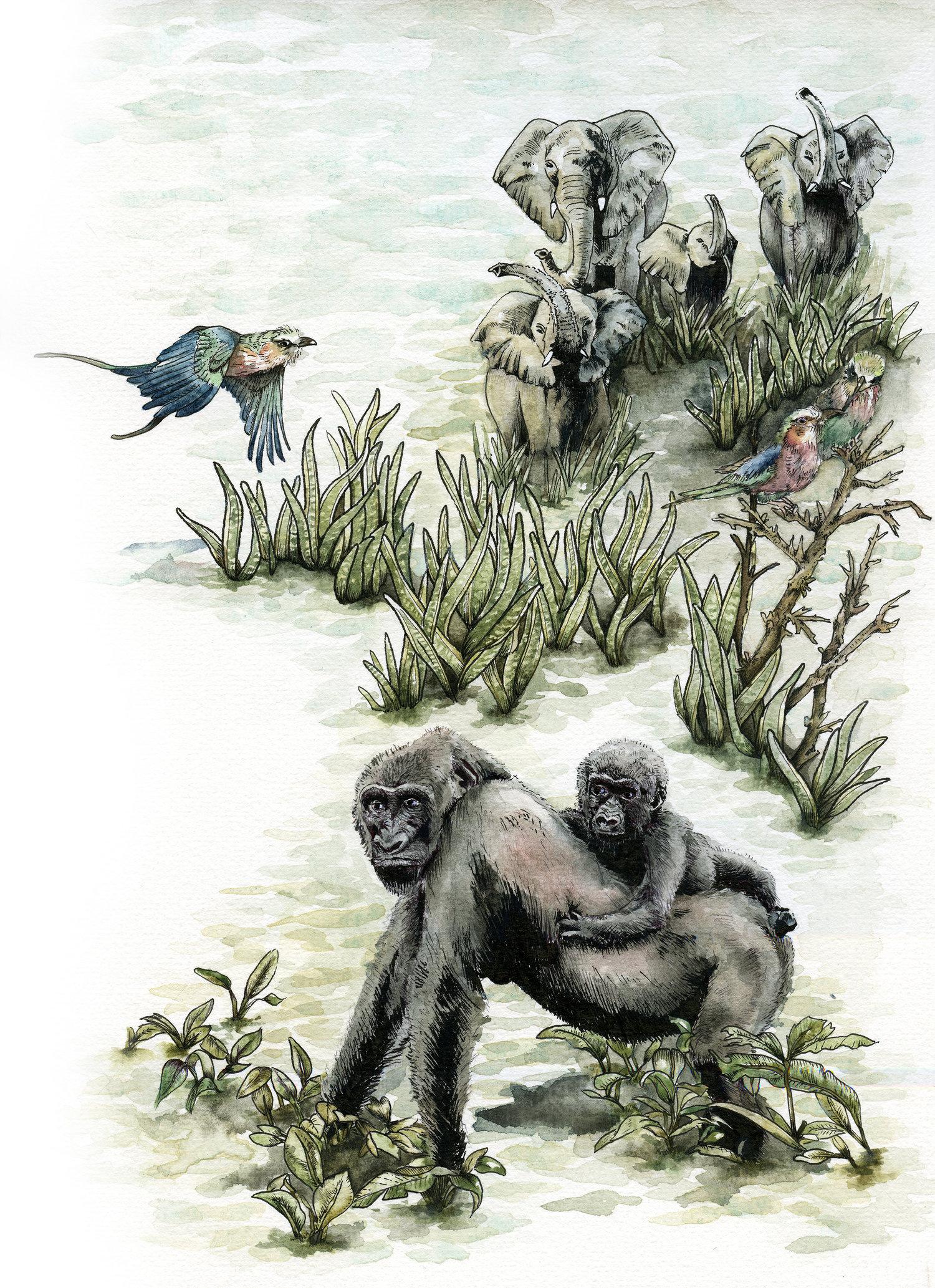Walking through Congo River, Watercolour & Ink on Paper, 24 x 30 cm, 2017.