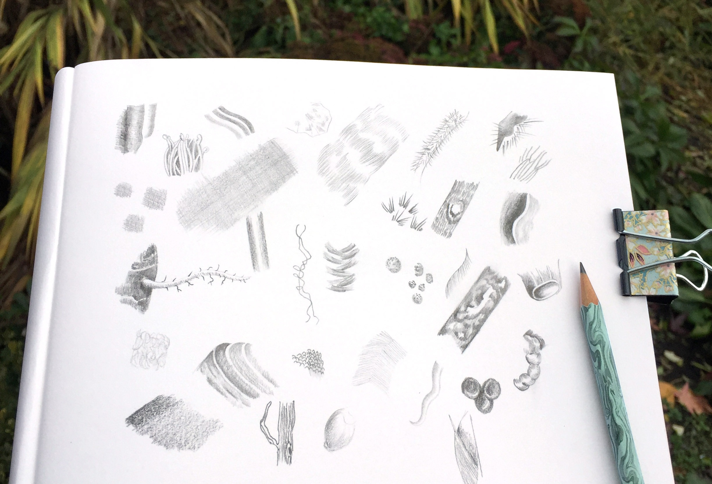 Textures from nature: mark making with pencil.