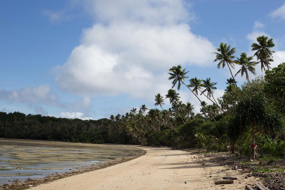 Palm trees along the Fijian coastline