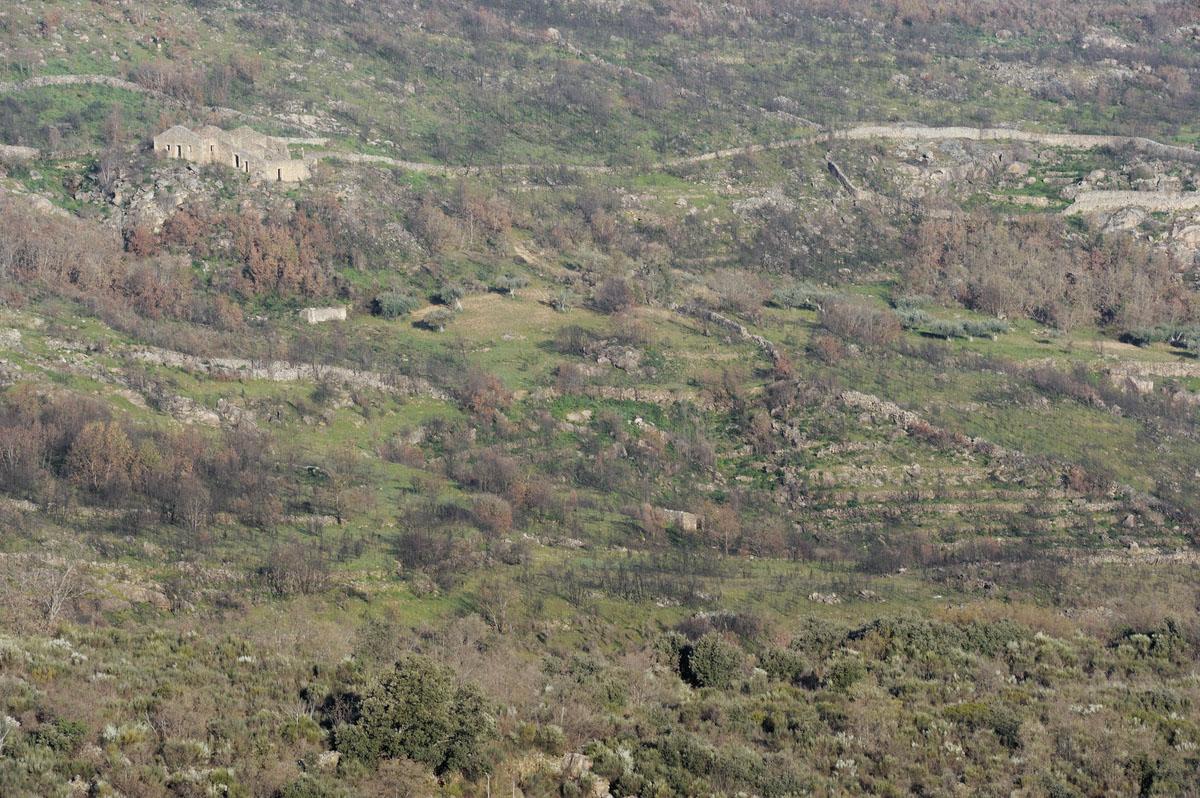 Verbrachte Kulturlandschaft im Faia Brava Reservat, Portugal. Bild: Staffan Widstrand, Rewilding Europe.
