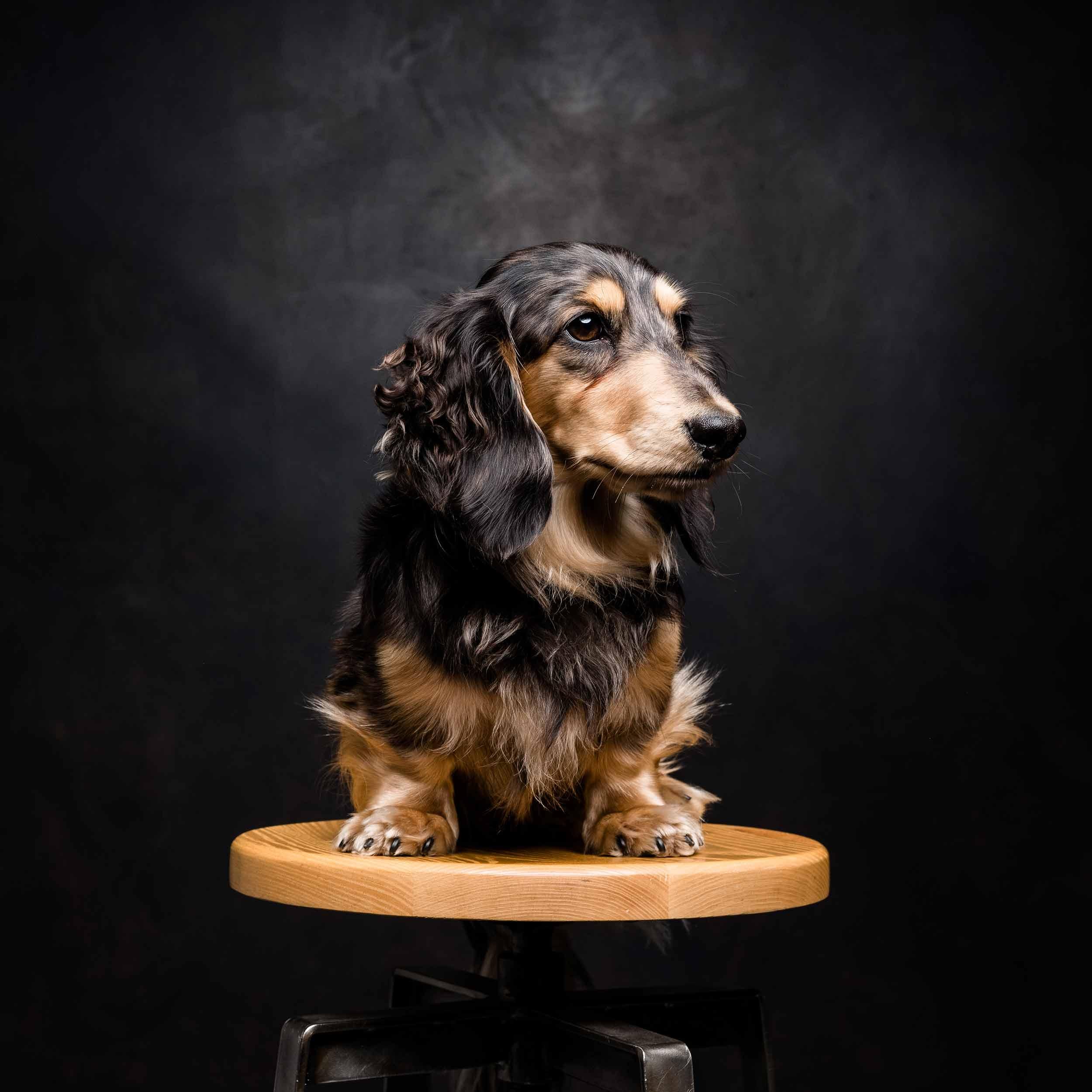 12.01---Dogs-Life_0001_8447.jpg