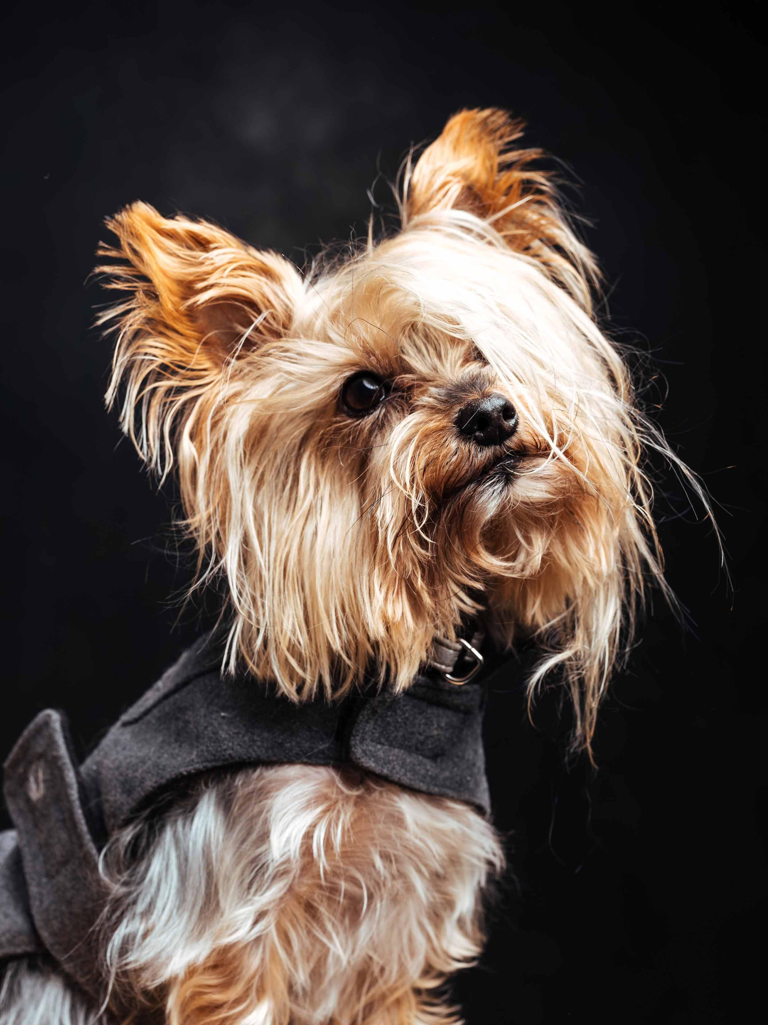 12.01---Dogs-Life_0003_9635.jpg