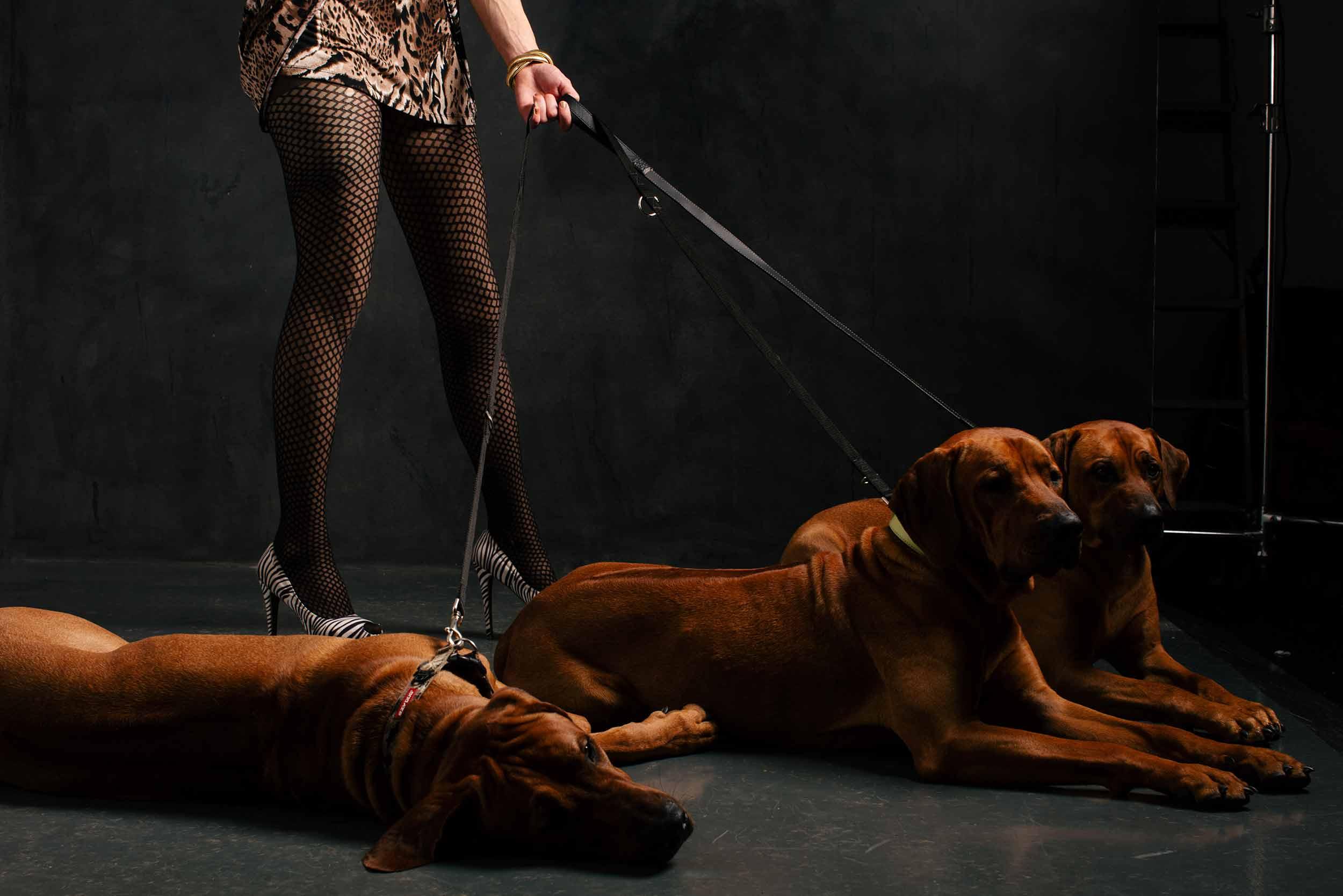 12.01---Dogs-Life_0005_1168.jpg