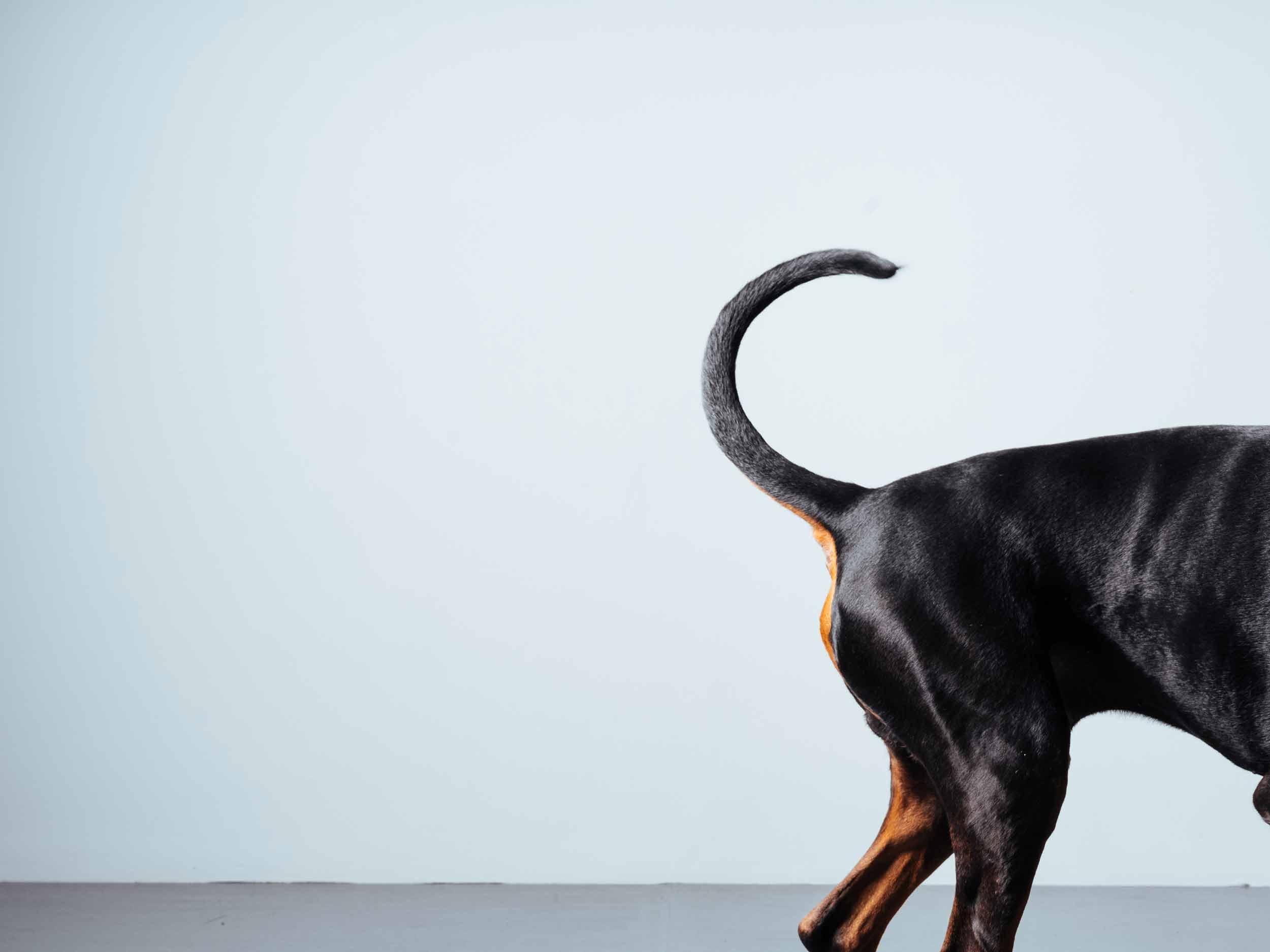 12.01---Dogs-Life_0006_06253.jpg