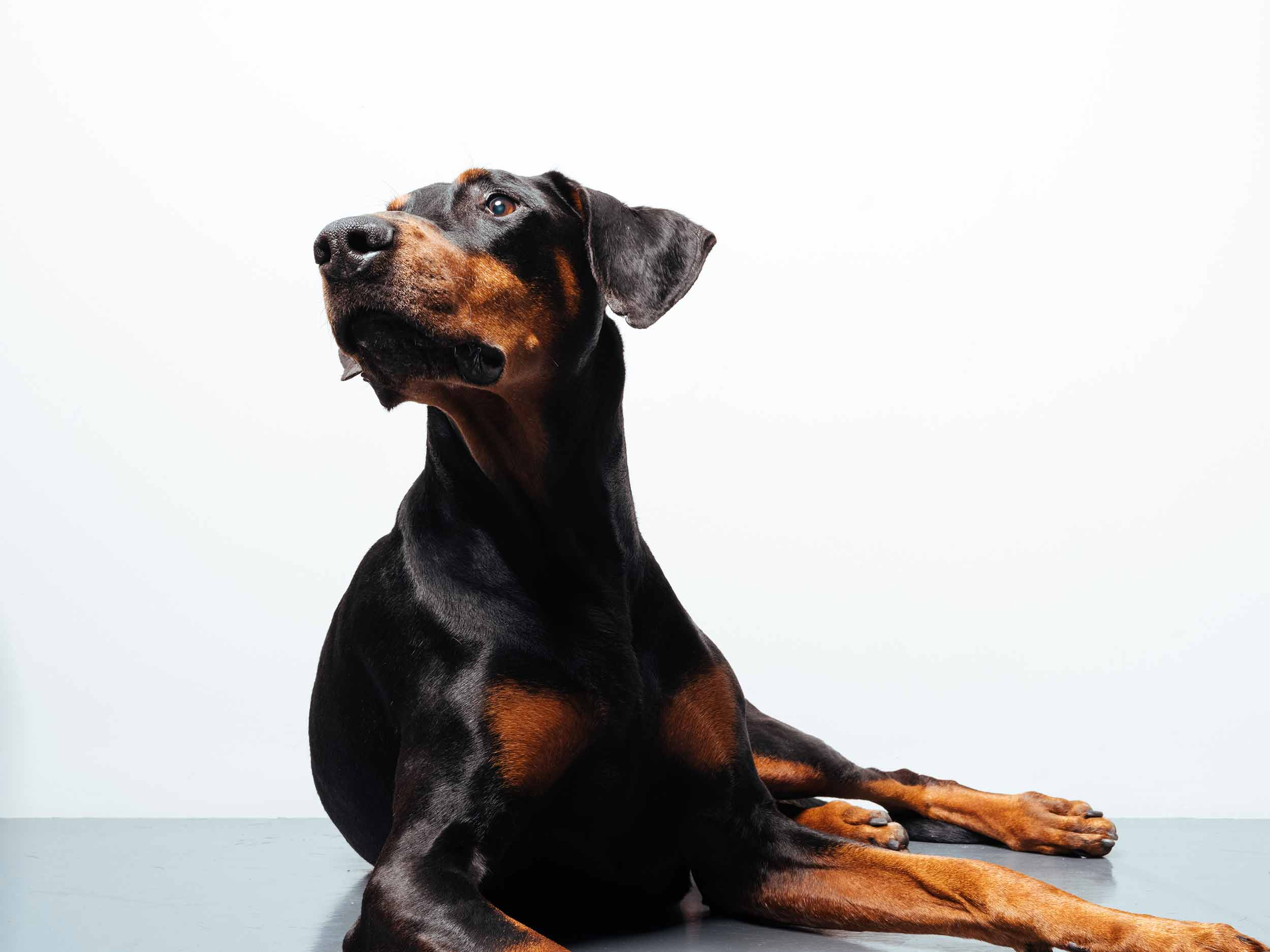 12.01---Dogs-Life_0012_06311.jpg