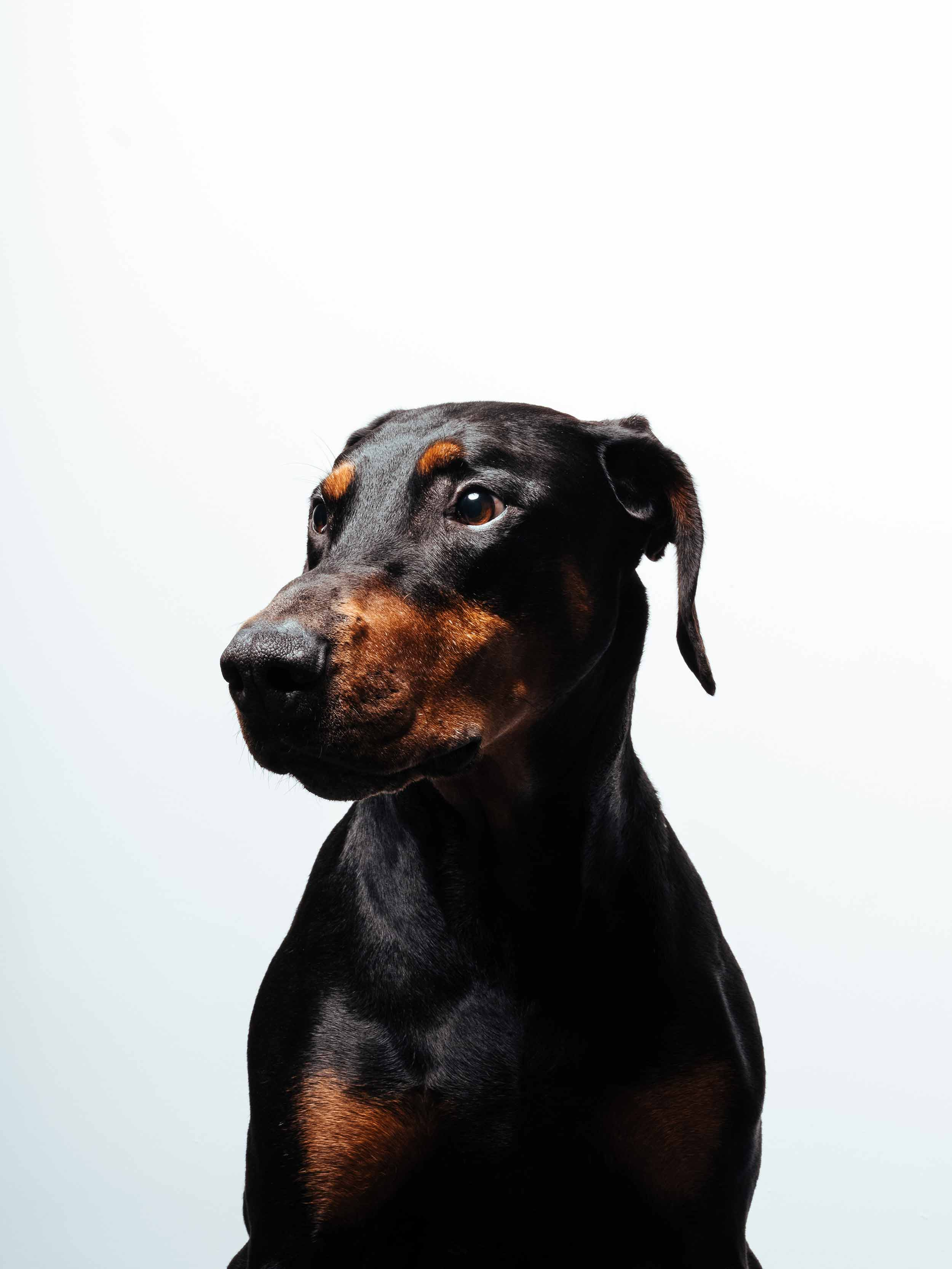 12.01---Dogs-Life_0013_06327.jpg