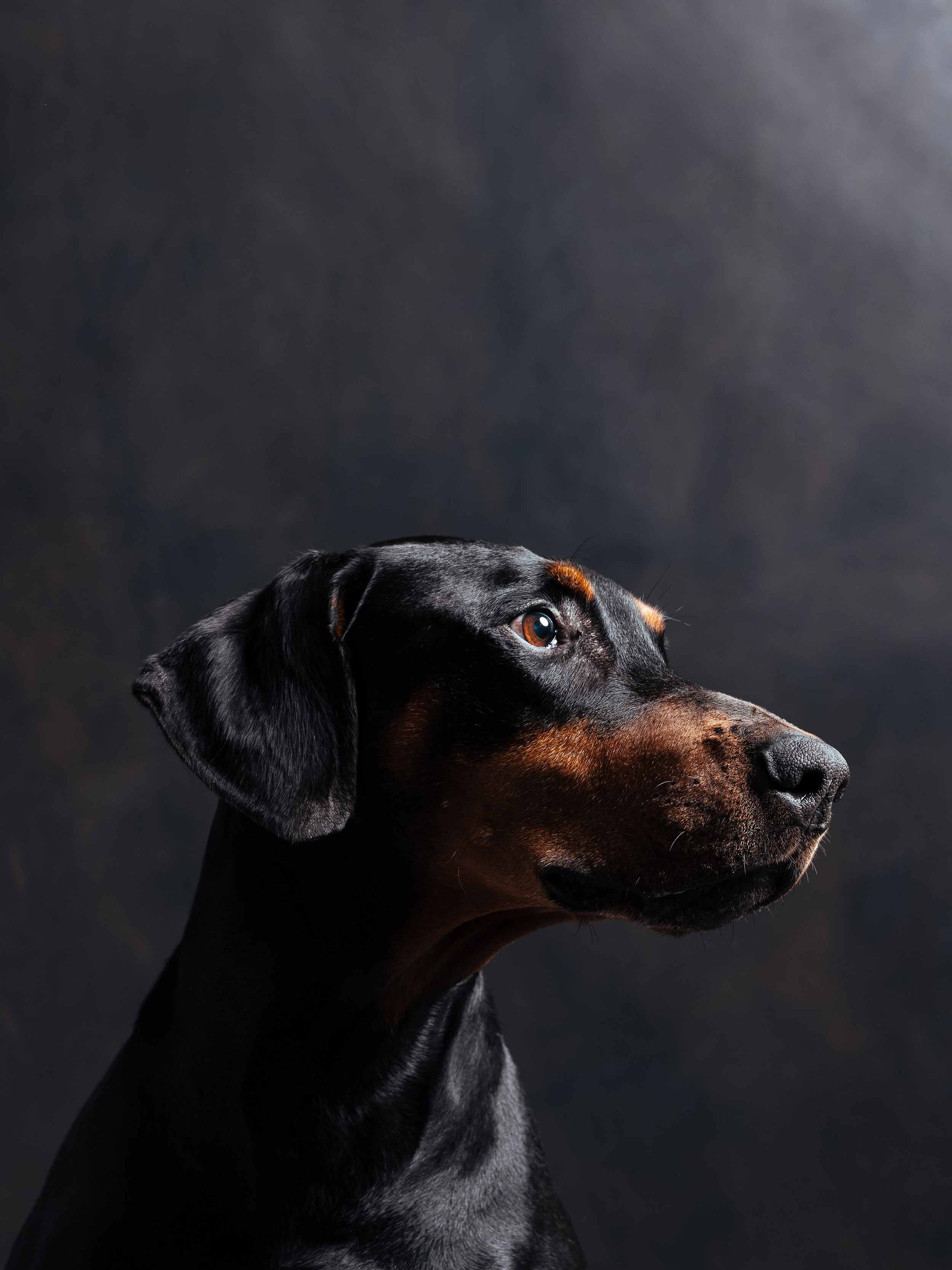 12.01---Dogs-Life_0014_06194.jpg