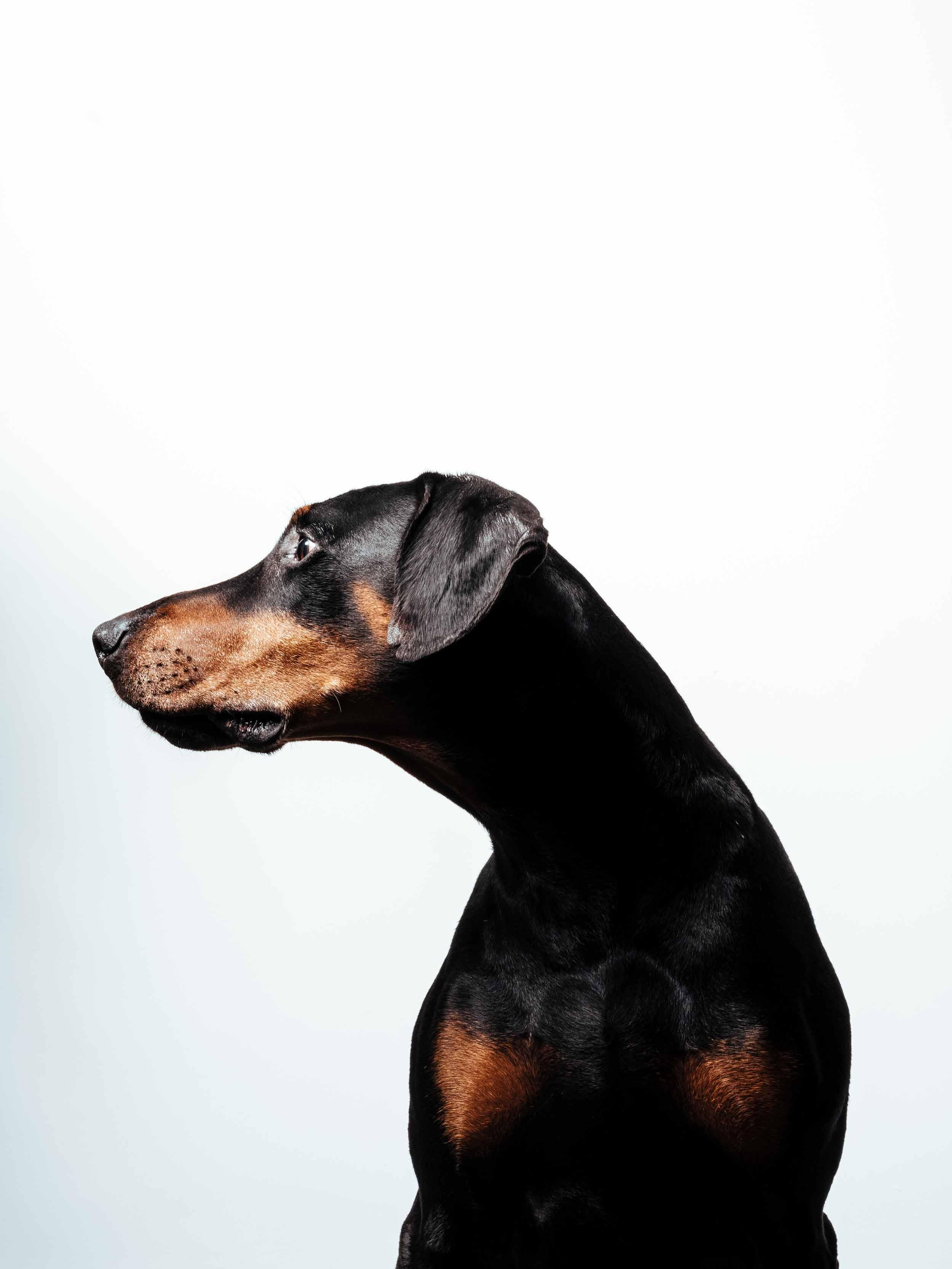 12.01---Dogs-Life_0015_06329.jpg