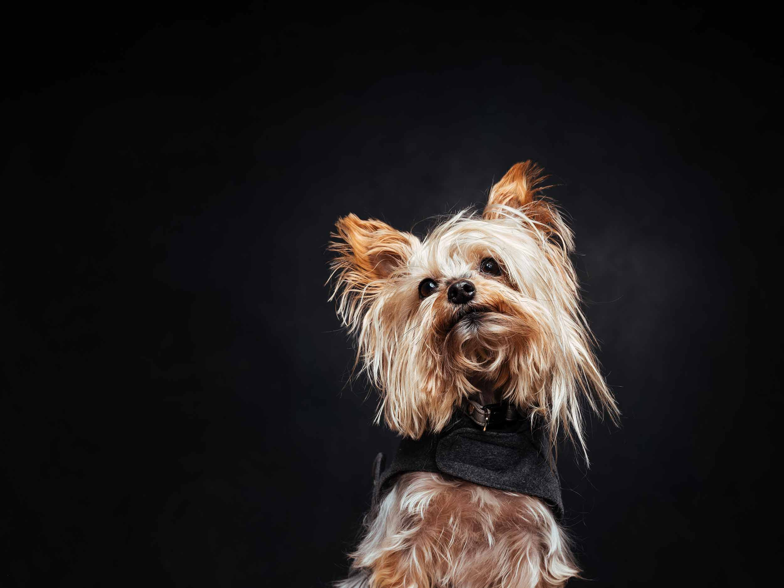 12.01---Dogs-Life_0017_9615.jpg