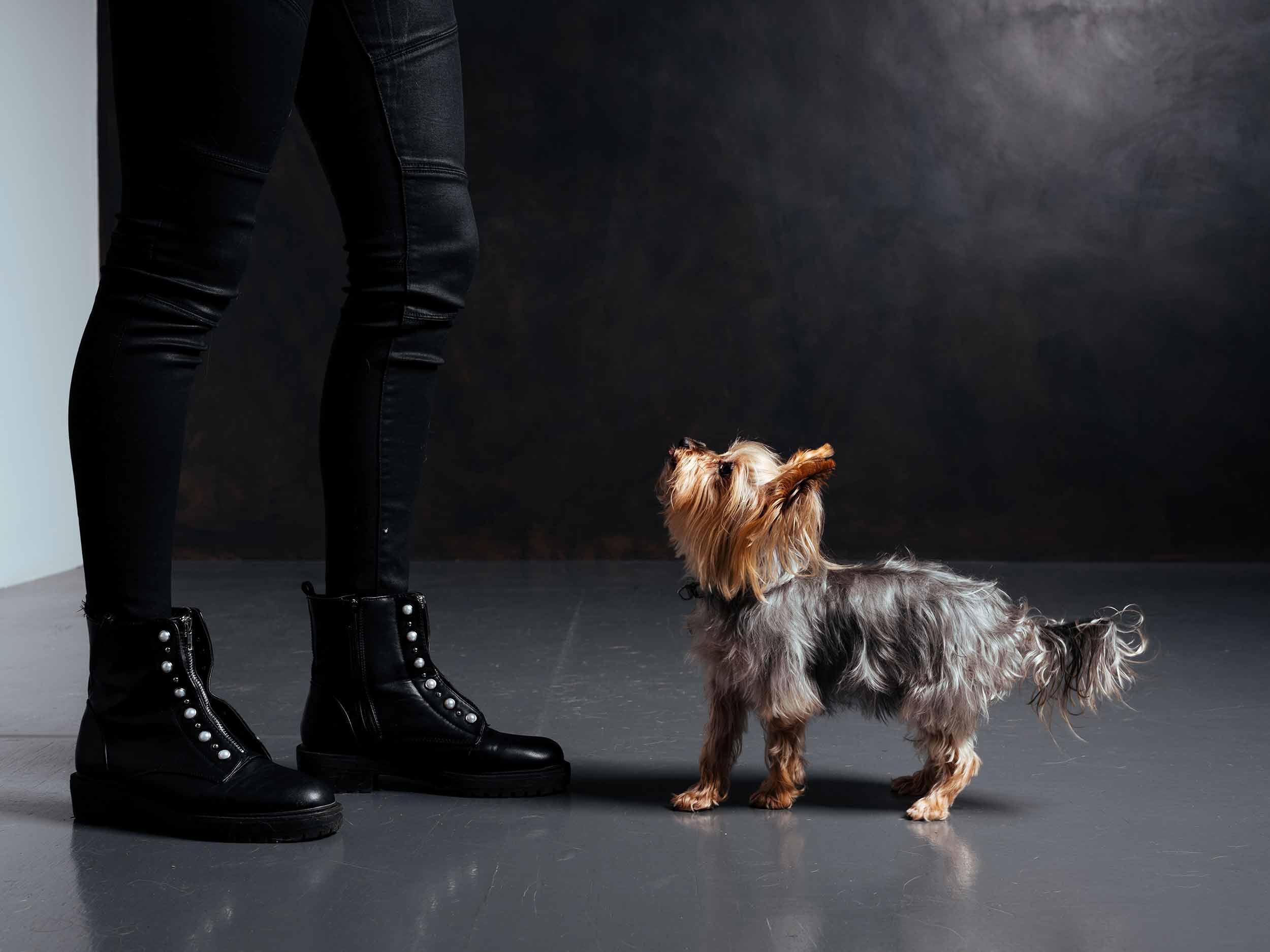 12.01---Dogs-Life_0021_9724.jpg
