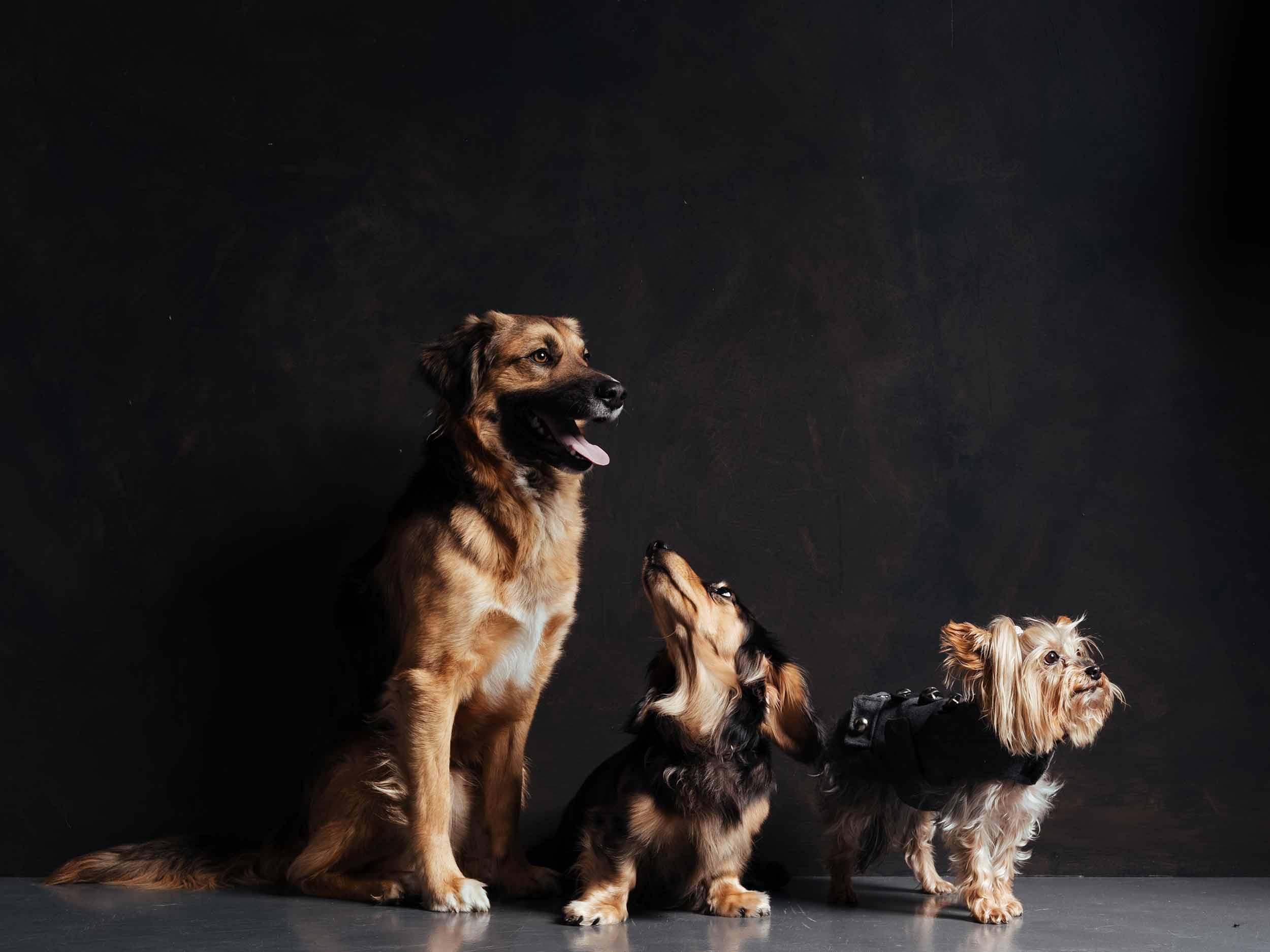 12.01---Dogs-Life_0027_9849.jpg