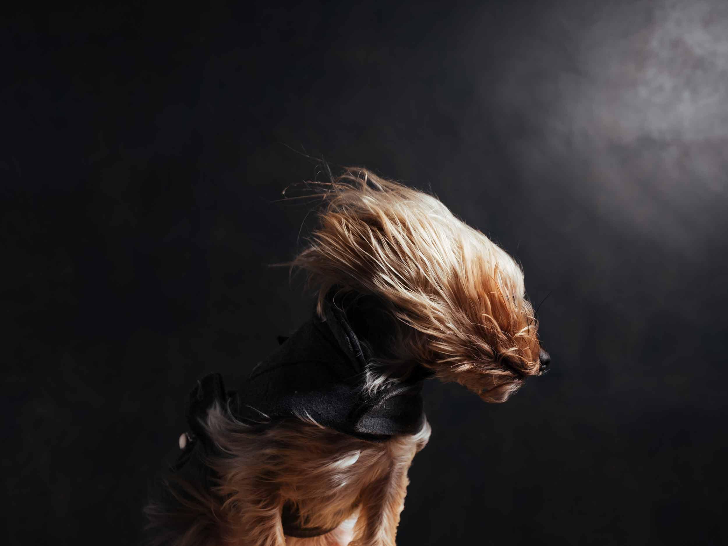 12.01---Dogs-Life_0031_9887.jpg