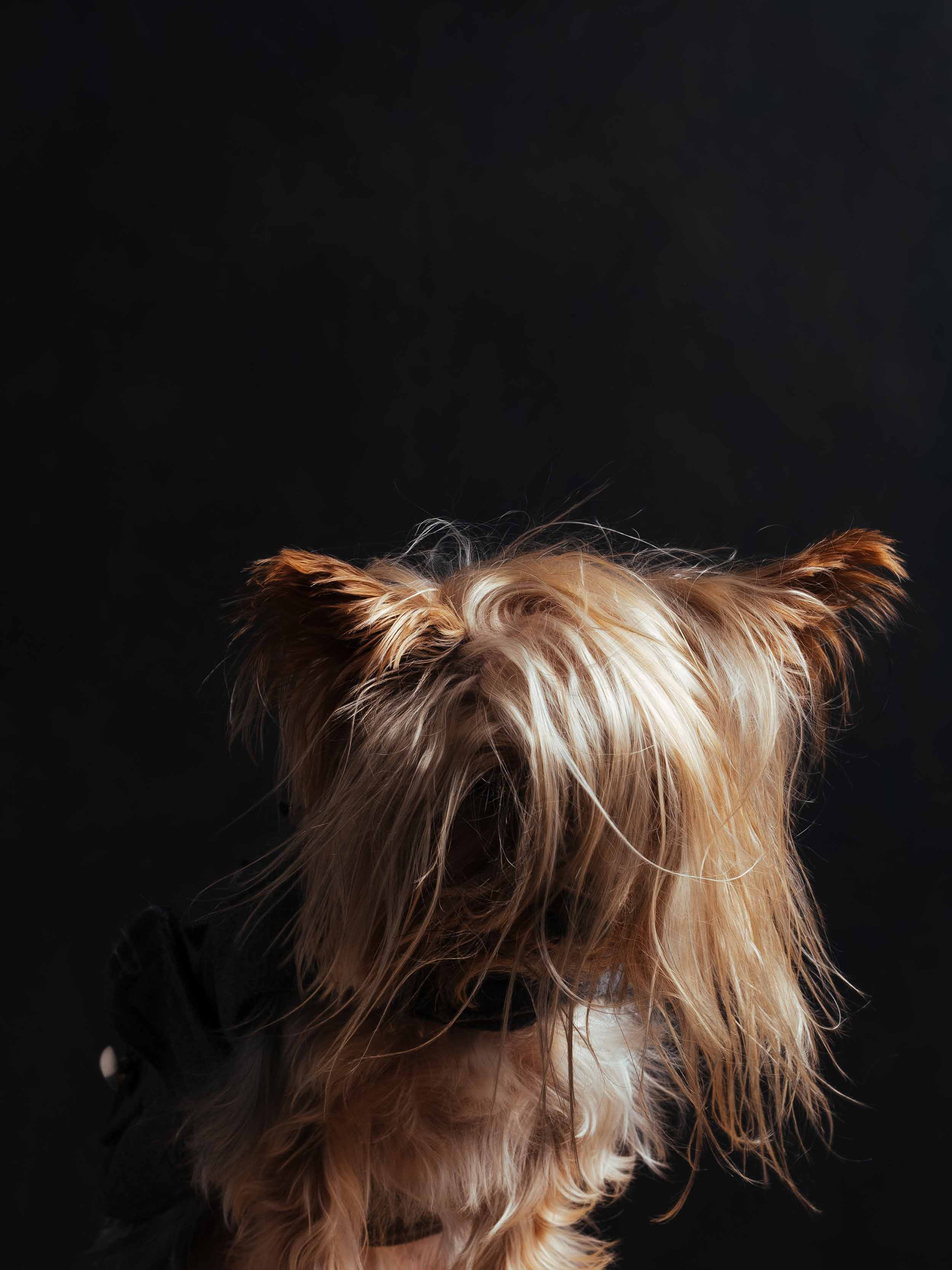 12.01---Dogs-Life_0036_9880.jpg