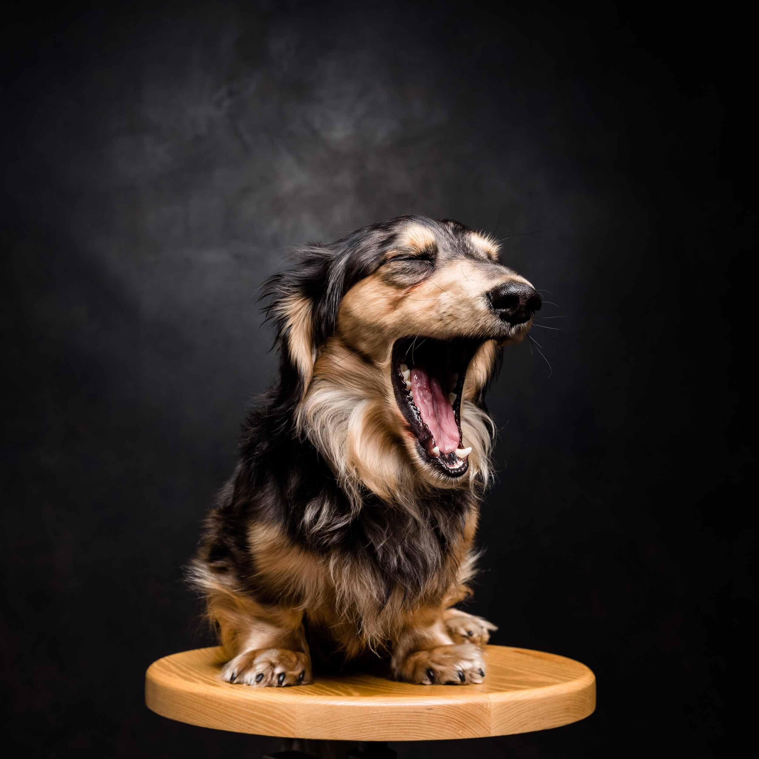 12.01---Dogs-Life_0038_8466.jpg