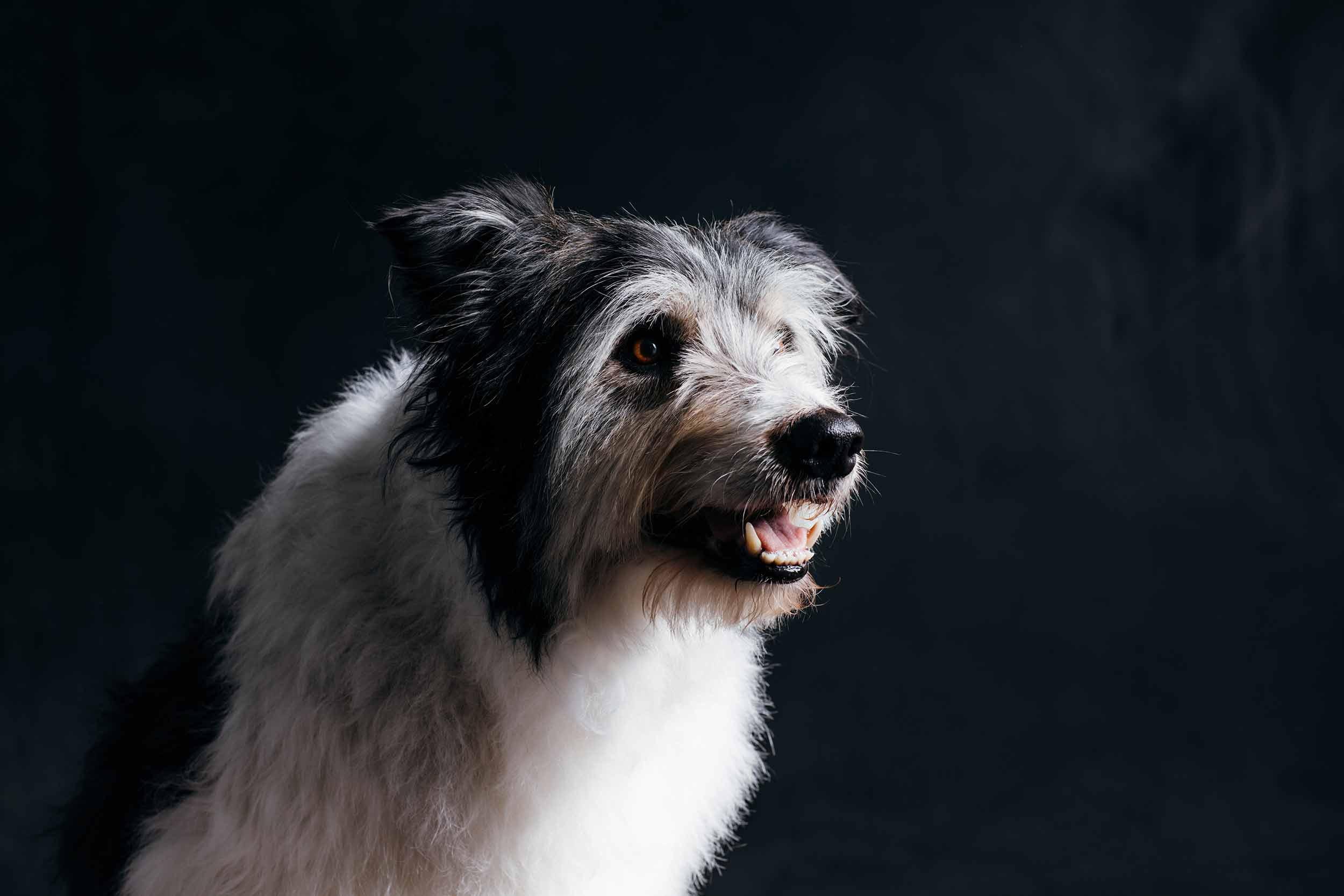 12.01---Dogs-Life_0045_6630.jpg