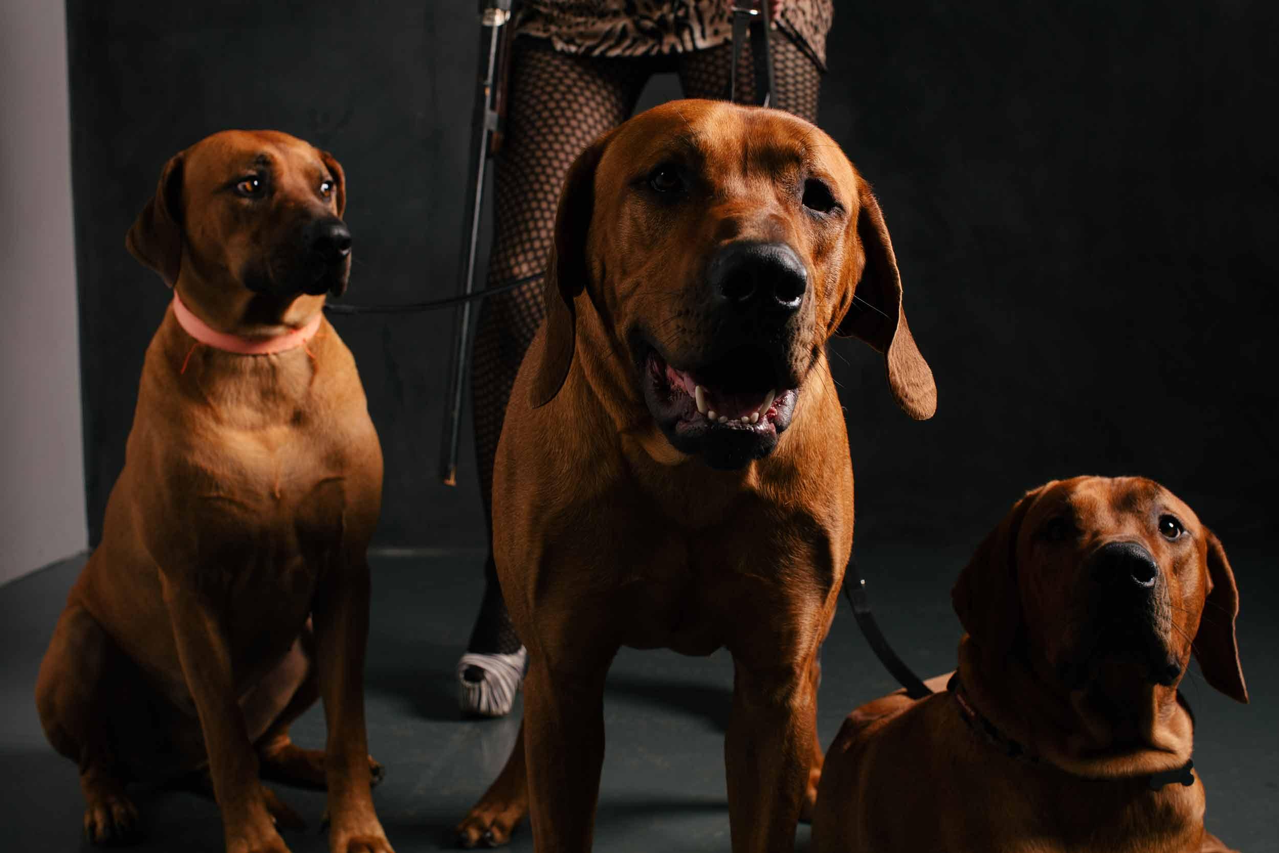 12.01---Dogs-Life_0046_1097.jpg