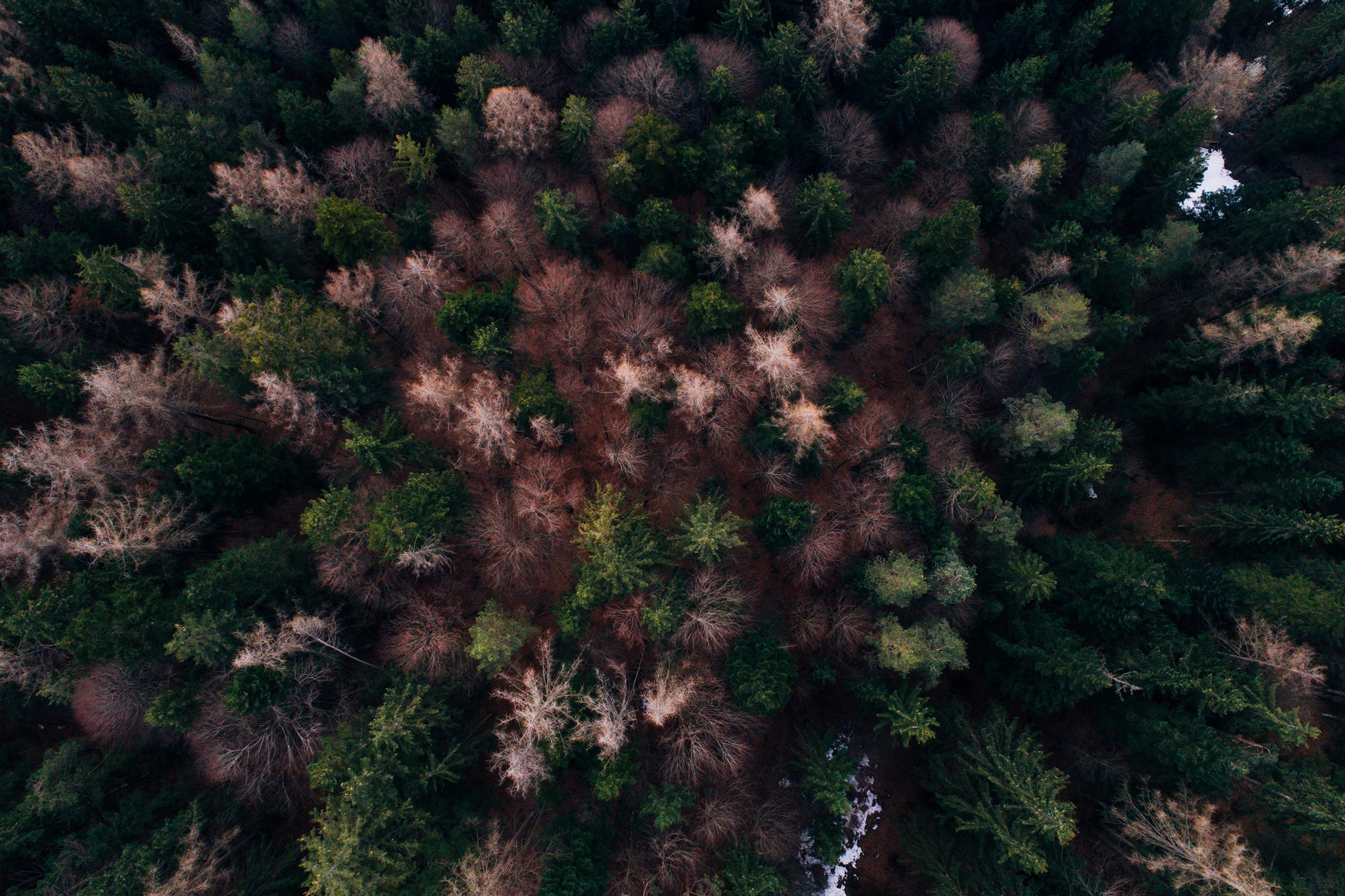 Aerial_Vision_0029_0044.jpg