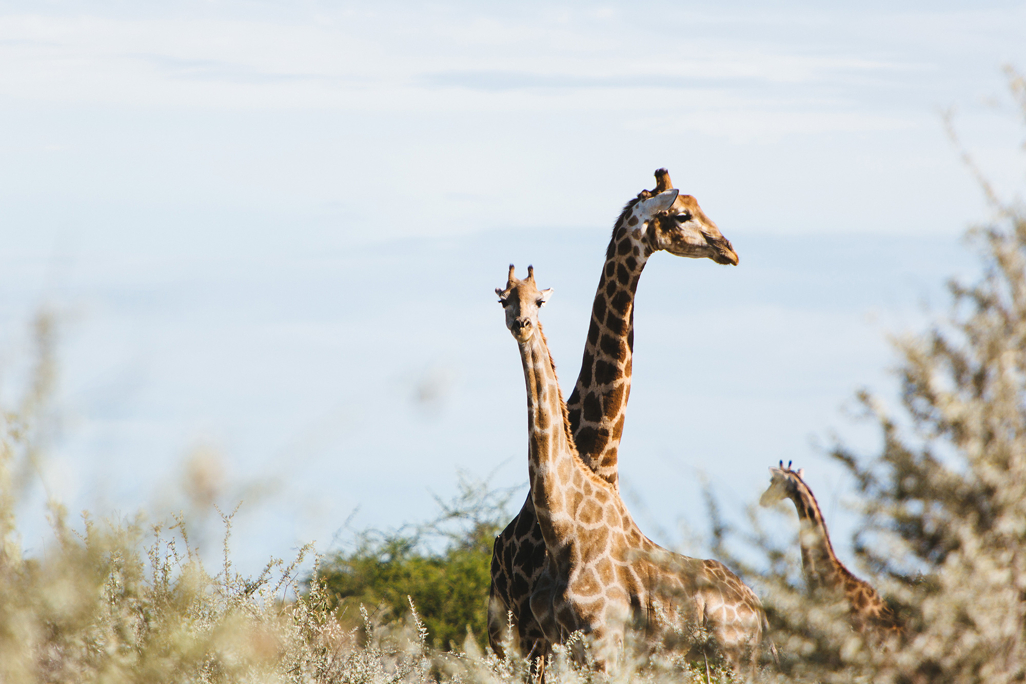 0004_Namibia_6885.jpg