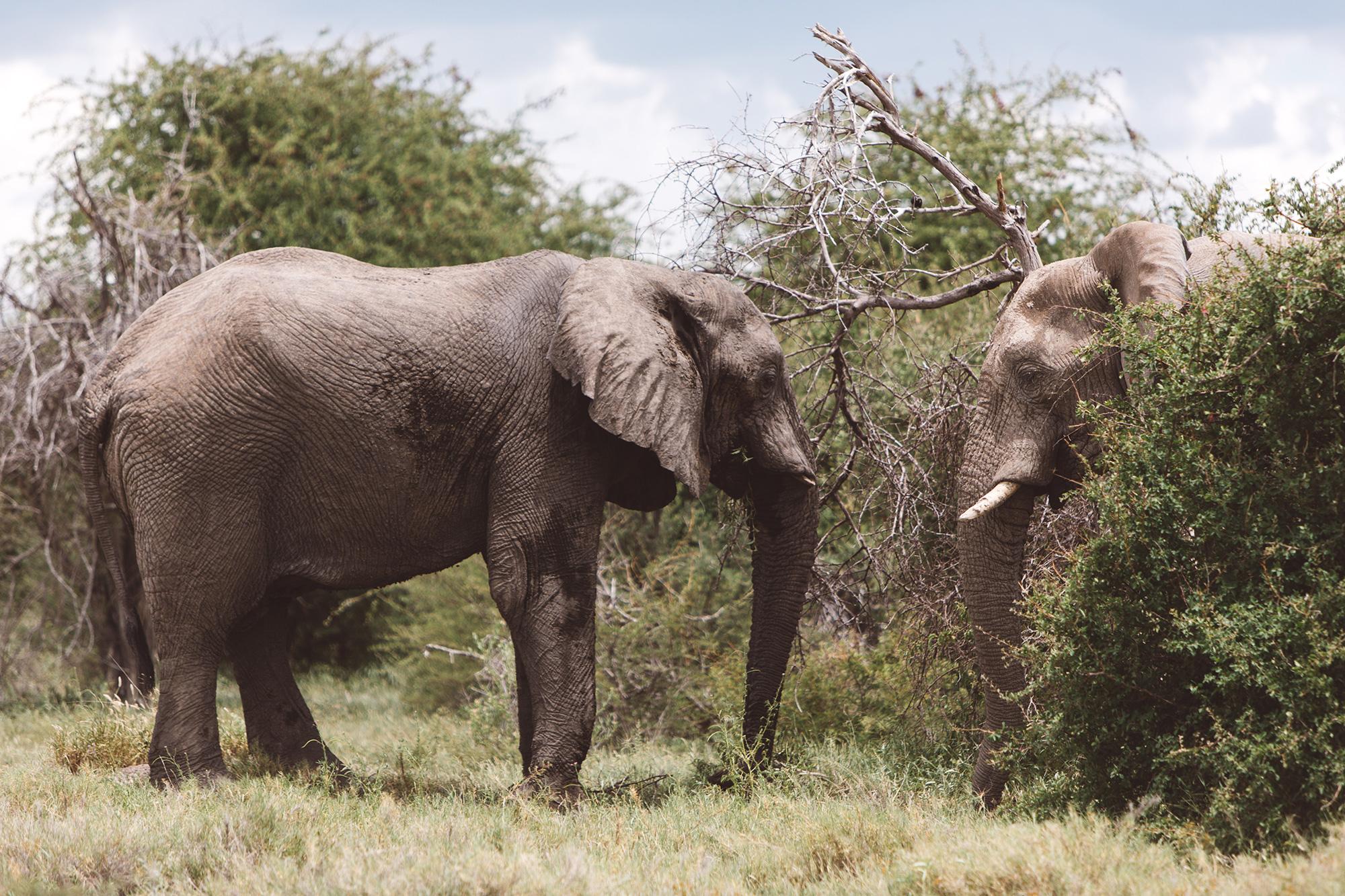 0005_Namibia_6966.jpg