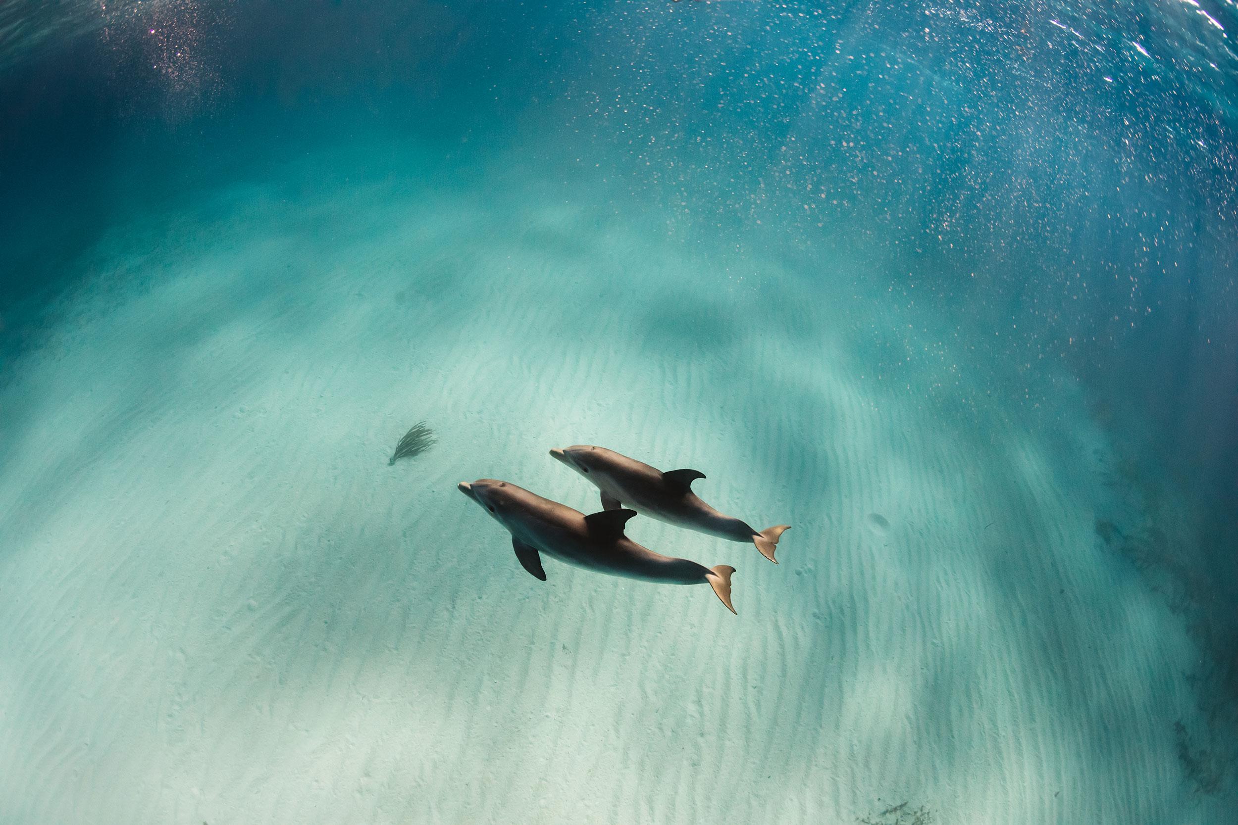 Travel_StudioM_Bahamas-43.jpg