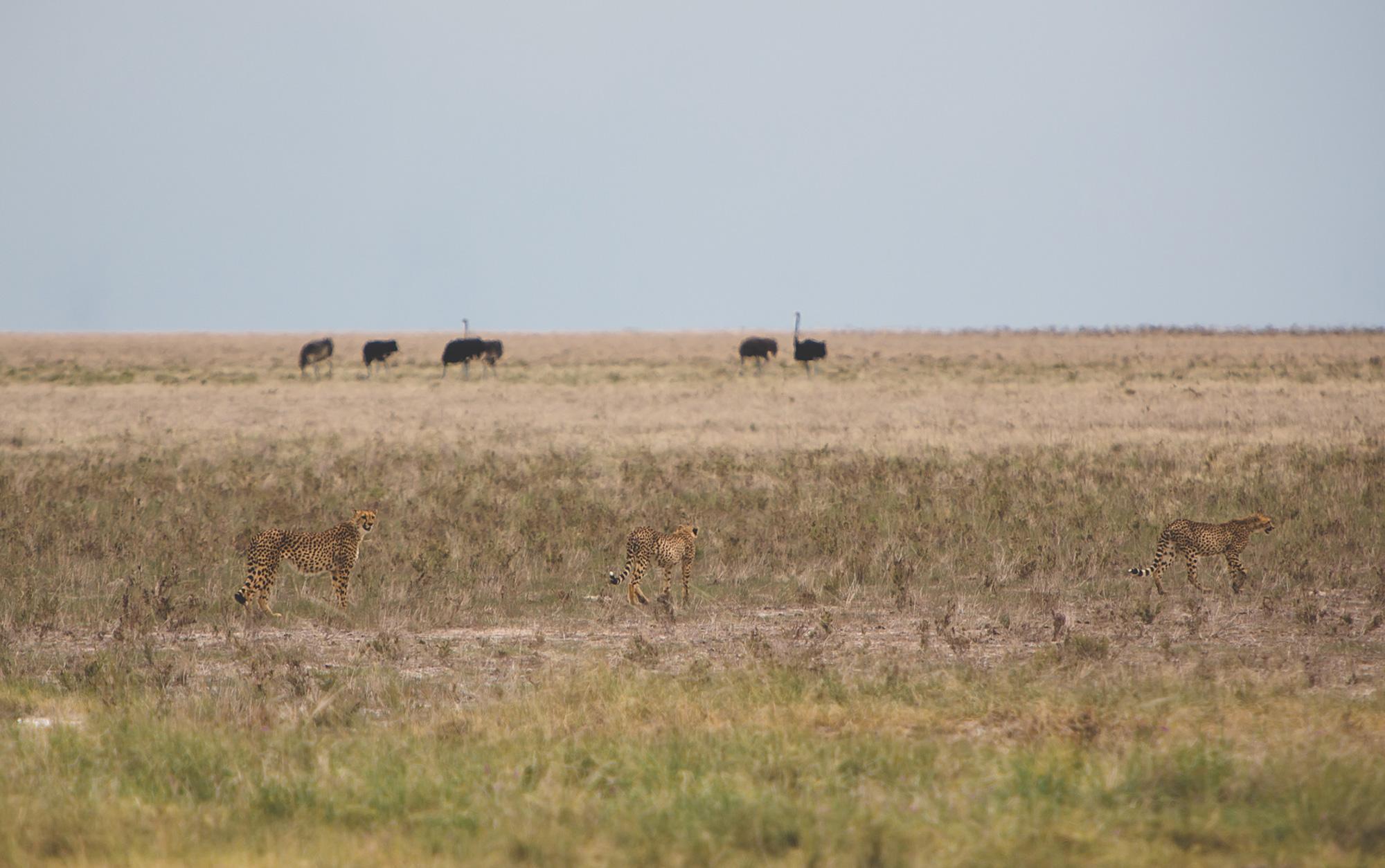 Namibia_Namutoni_Feb6_7020.jpg