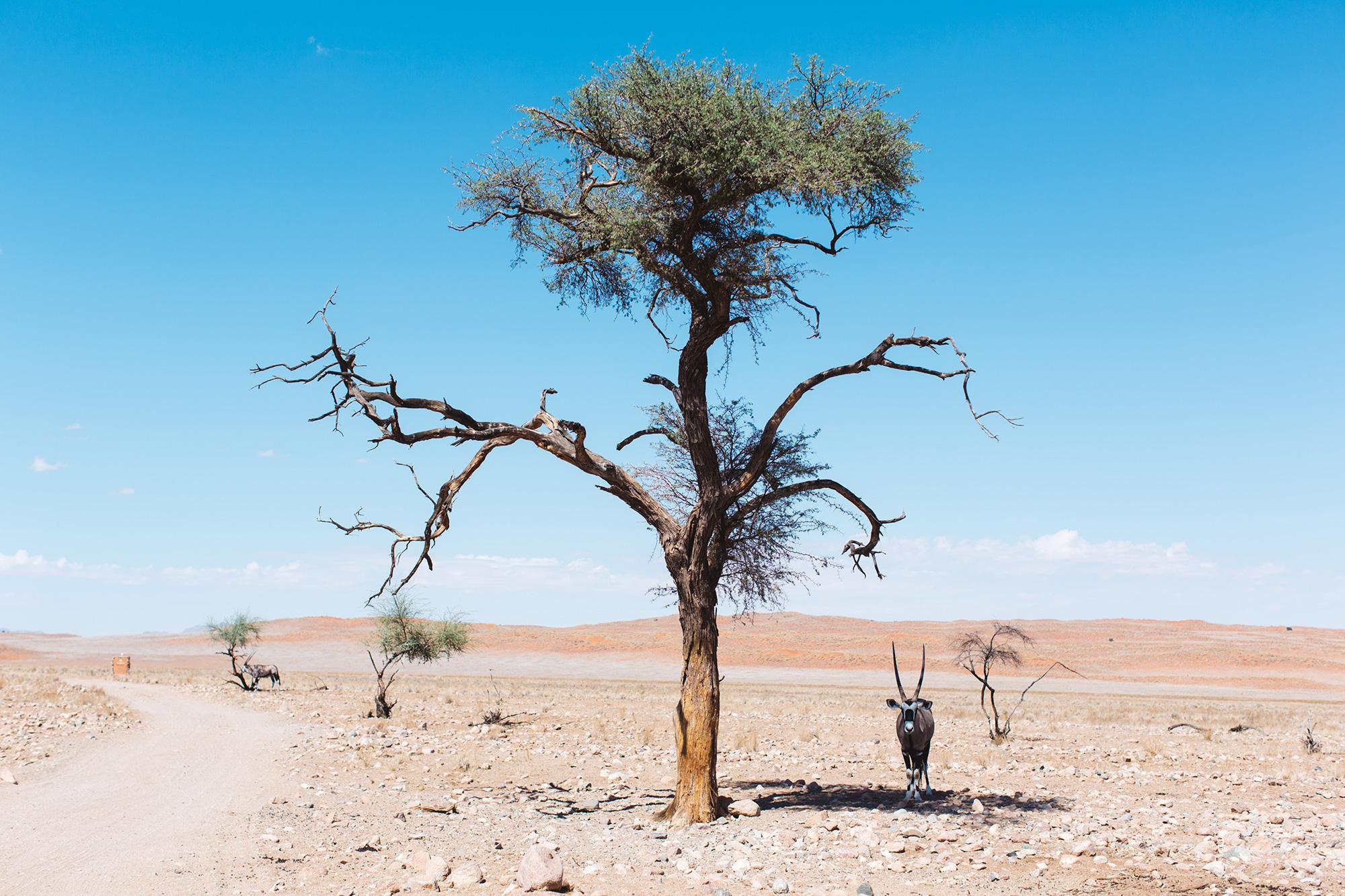 0024_Namibia_2652.jpg