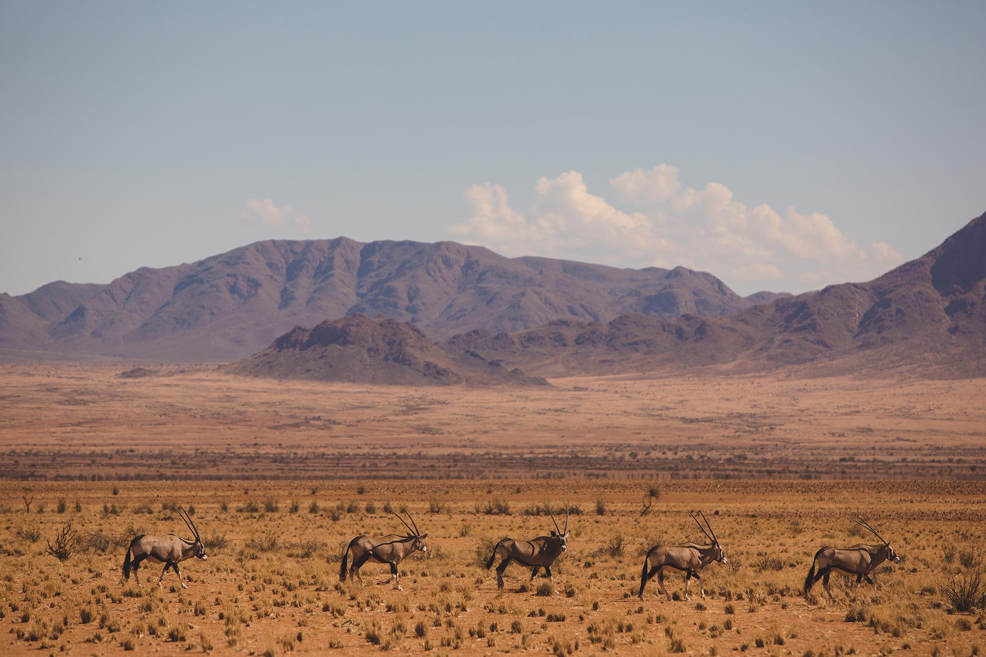 0030_Namibia_2642.jpg