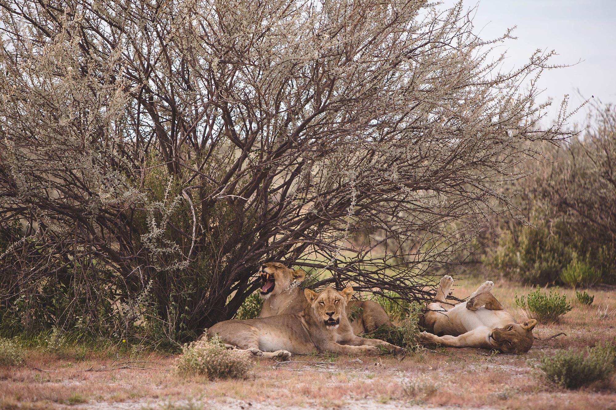 0007_Namibia_13102.jpg