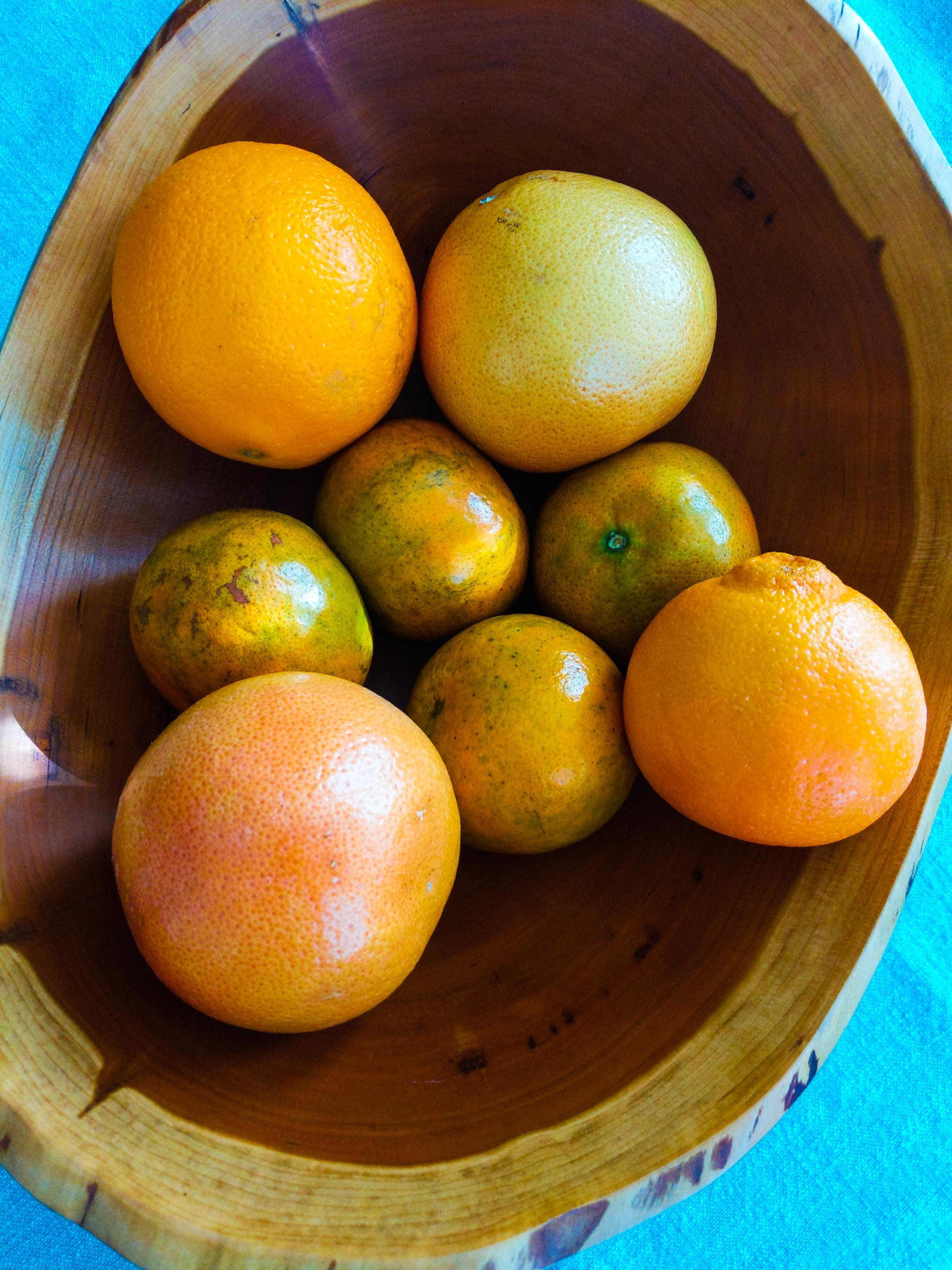 Marmalade 1 BLOG.jpg