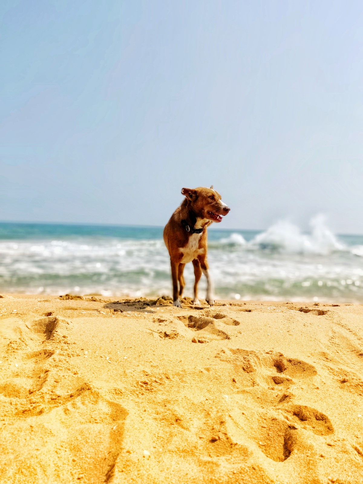 Dogs are recurring presence in Tishani's poetry, this is a photograph of one of the many dogs she's adopted in her home by the sea.