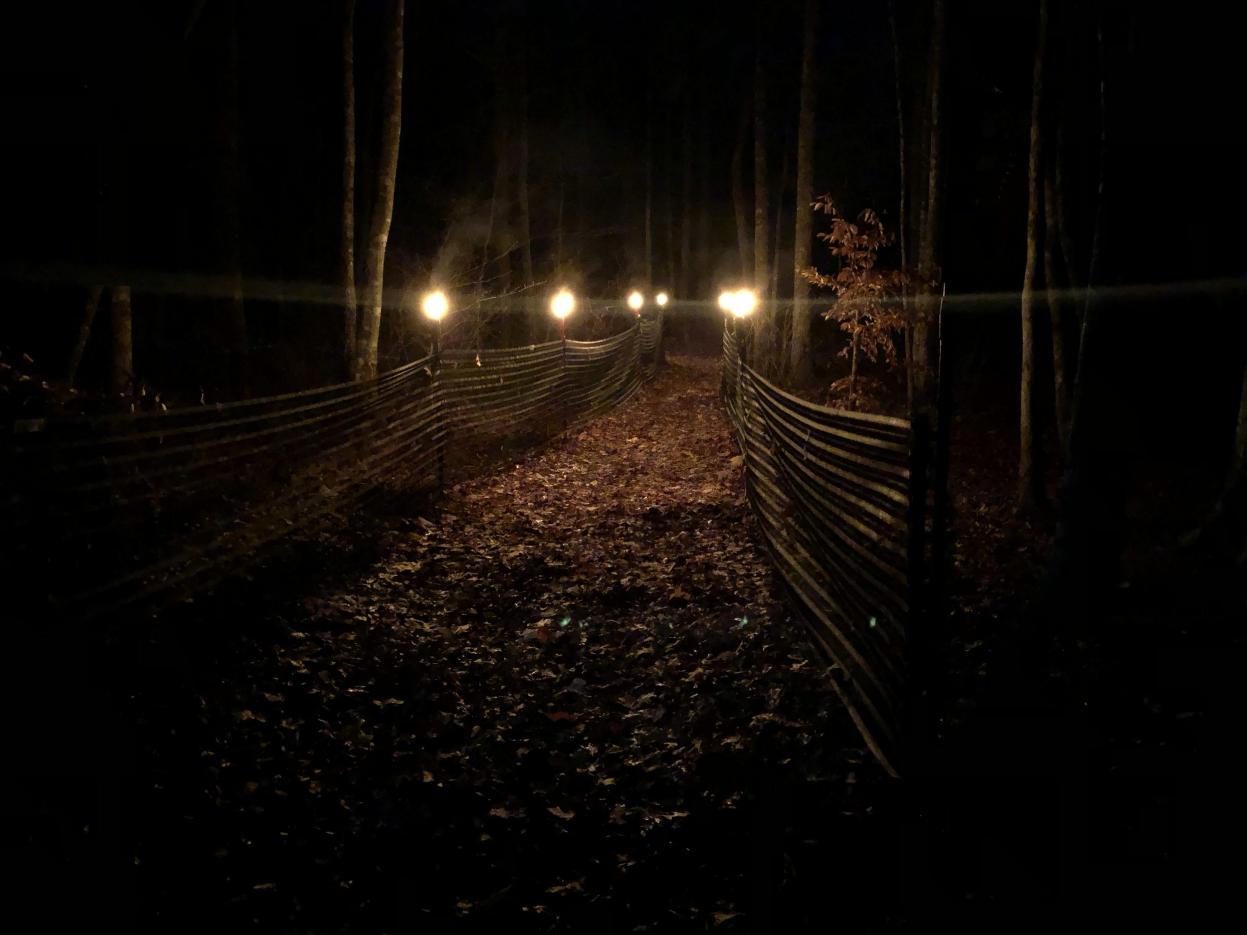 The start line lights up the forest in the early hours of the morning.