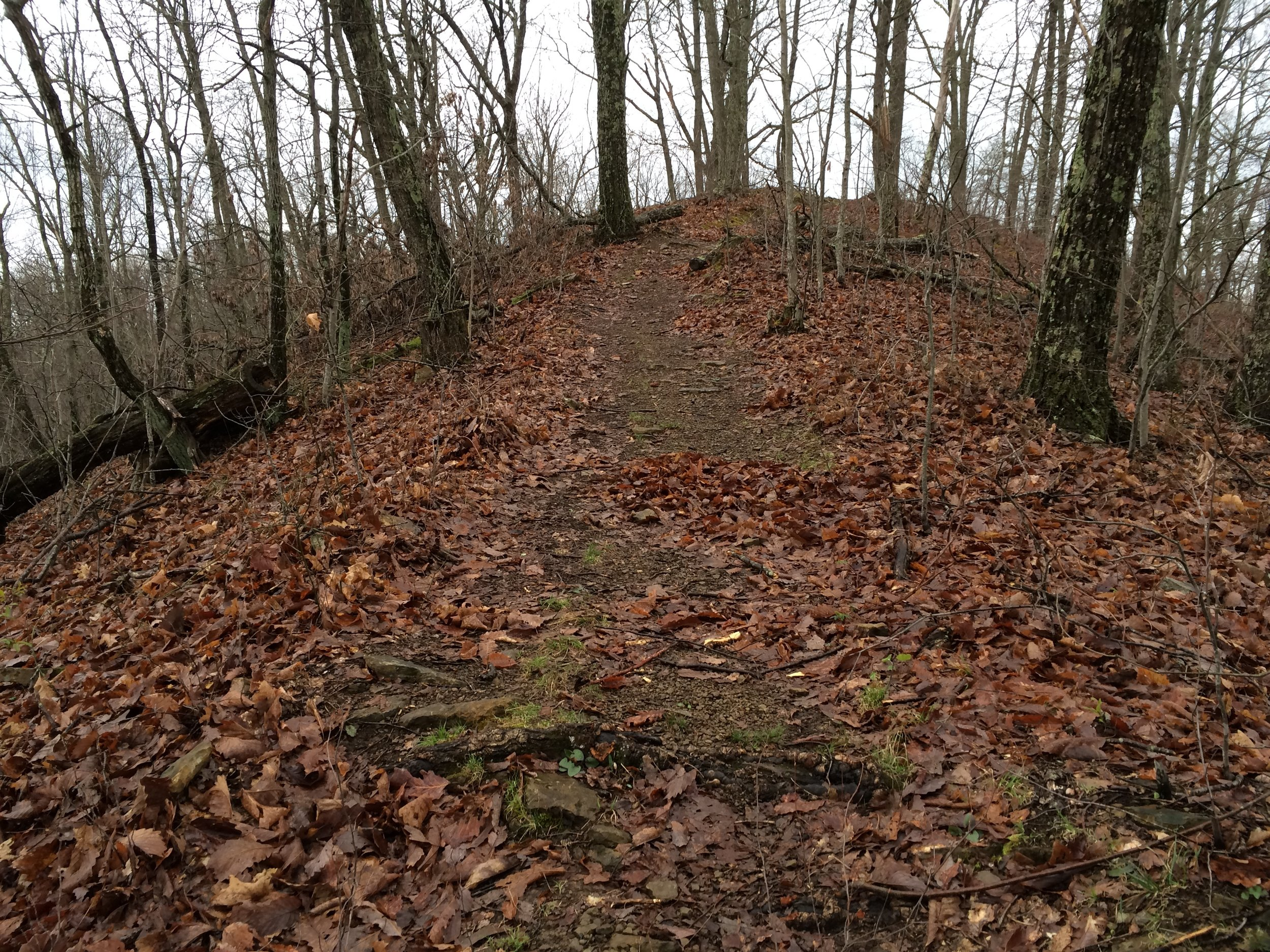 Some of the 10 Miler's challenging terrain.