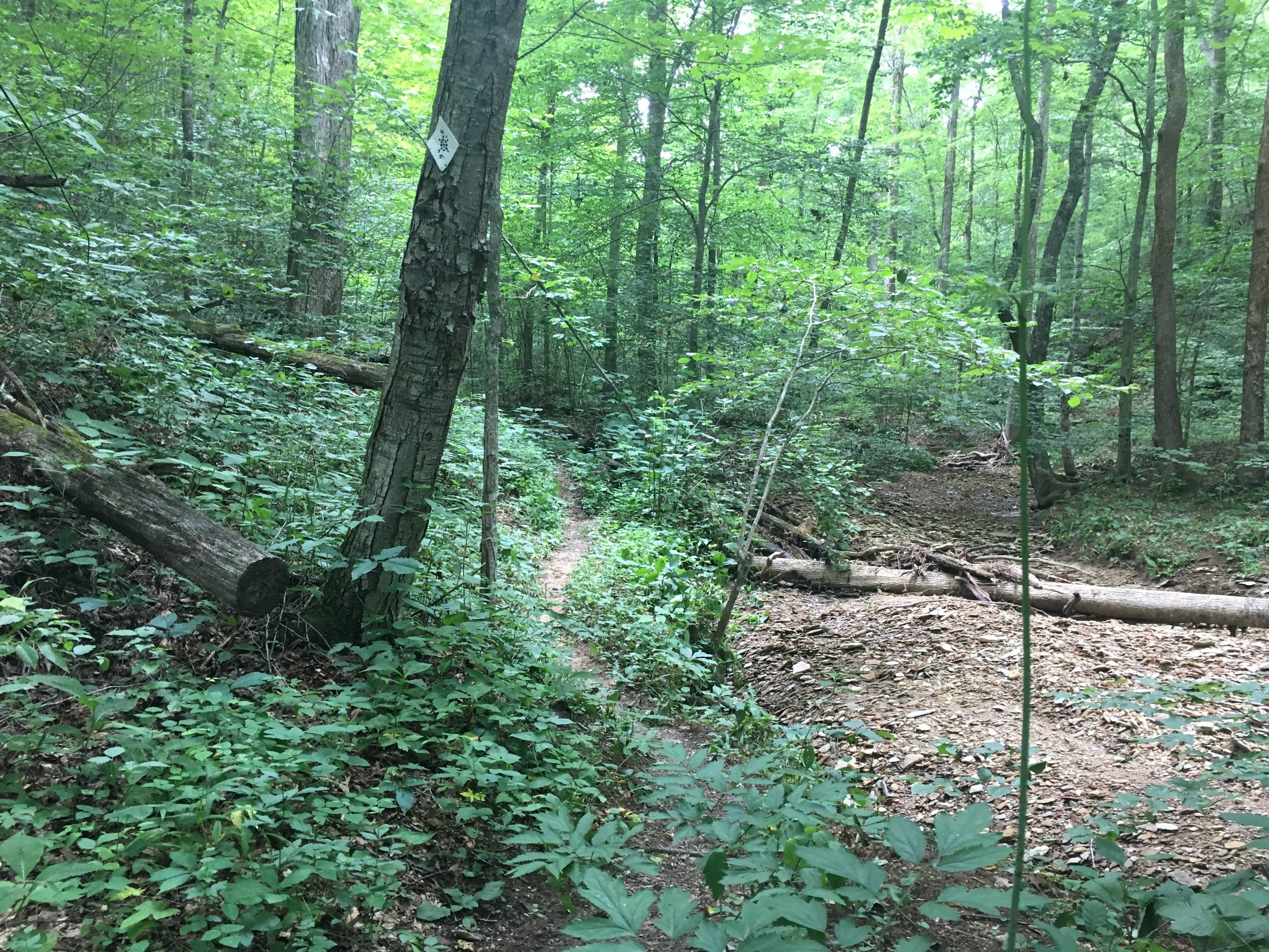 The trail marking here along the Big Turtle 50 Miler course is easy to miss if your eyes aren't moving along the trail.