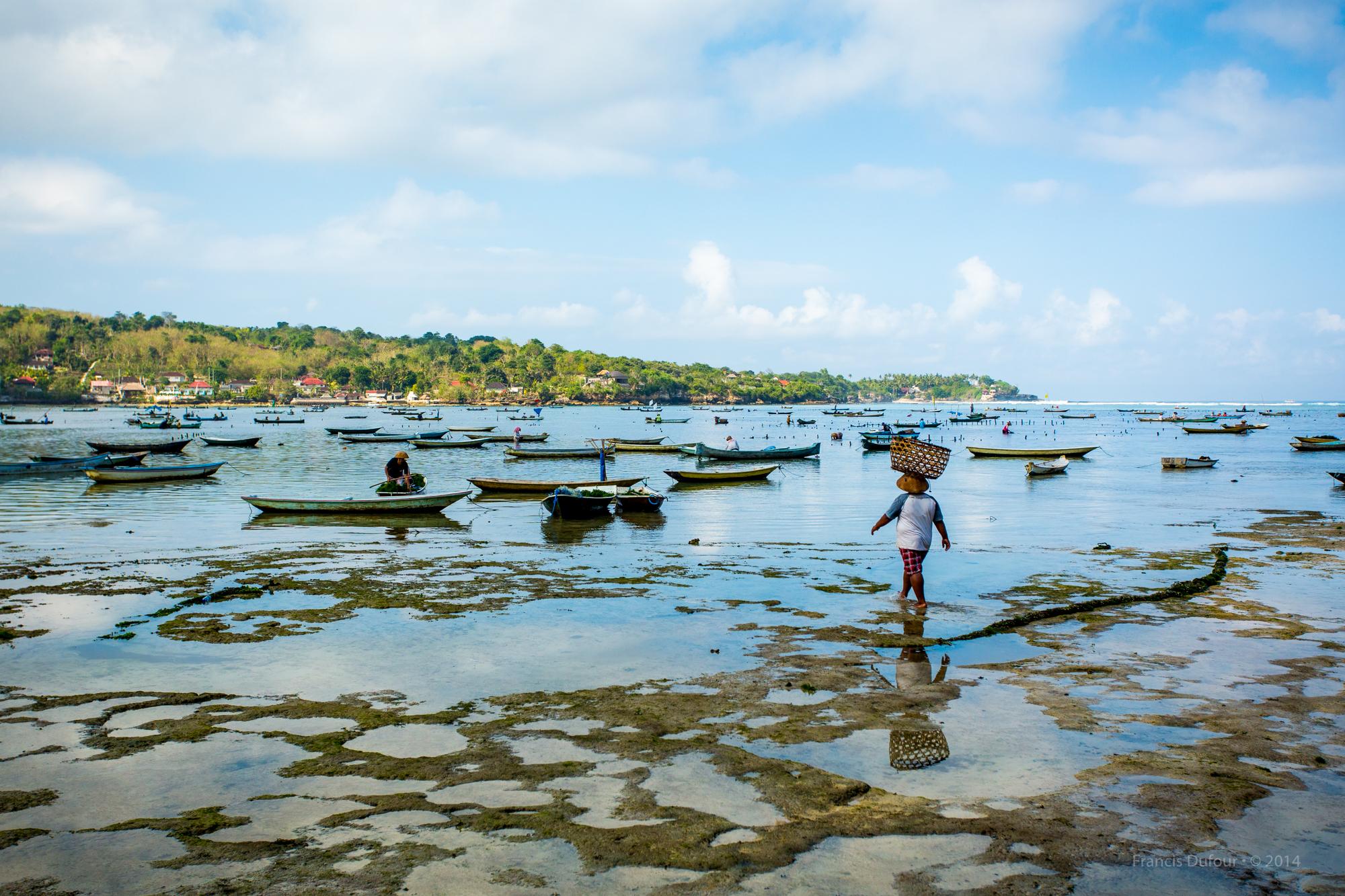 Seawed farming between Nusa Lambogan and Ceningan Islands (Indon