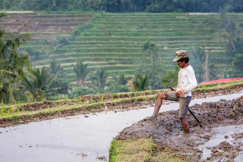 Worker in a Rice Field