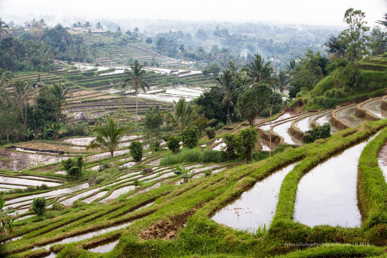 Unesco Jatiluwih Rice Fields (Bali, Indonesia)