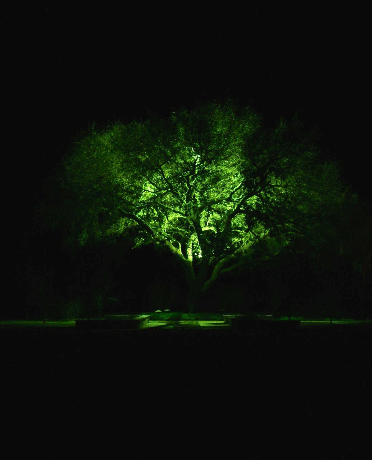 Line Voltage- South Texas Landscape Lighting