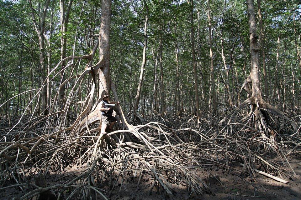 Mangrove-swamps-El-Salvador.jpeg