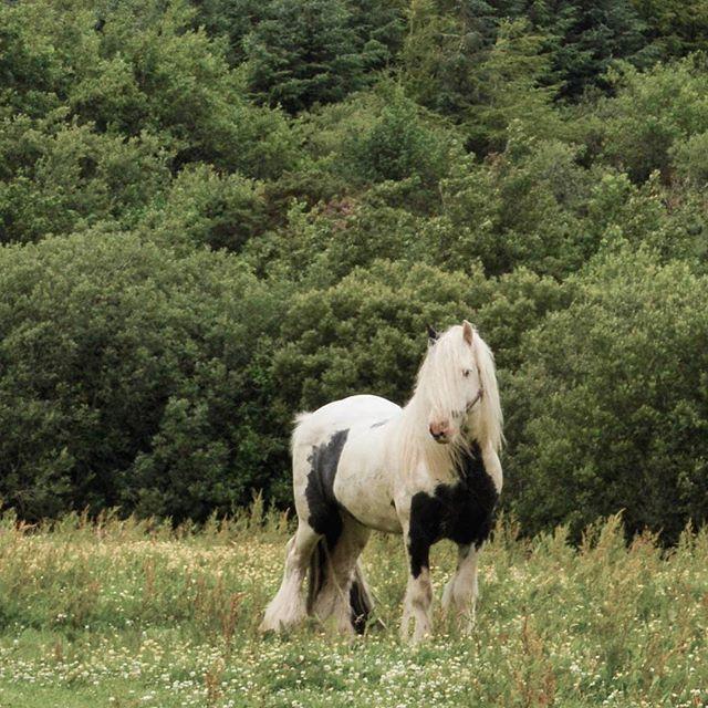 It's Friday and all I want is to be as fab as this horse ⭐
